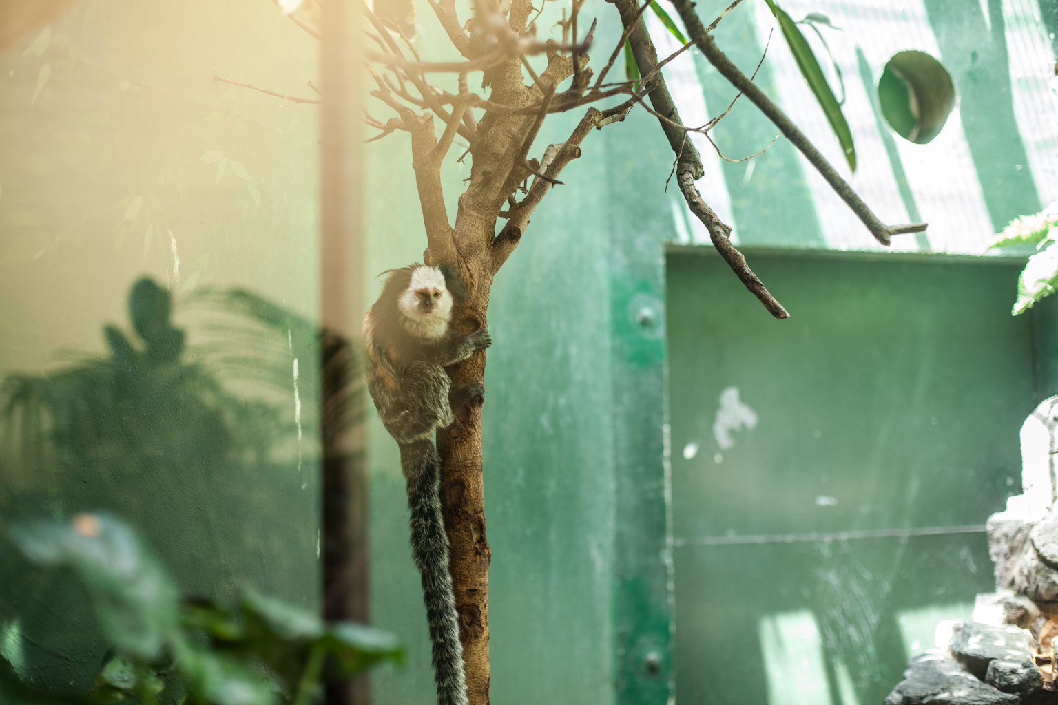Nathan and I took a short vacation to DC and NYC to visit friends and to reminisce over D.C.  This is at the National Zoo, perhaps my favorite zoo and I got to see the baby panda.