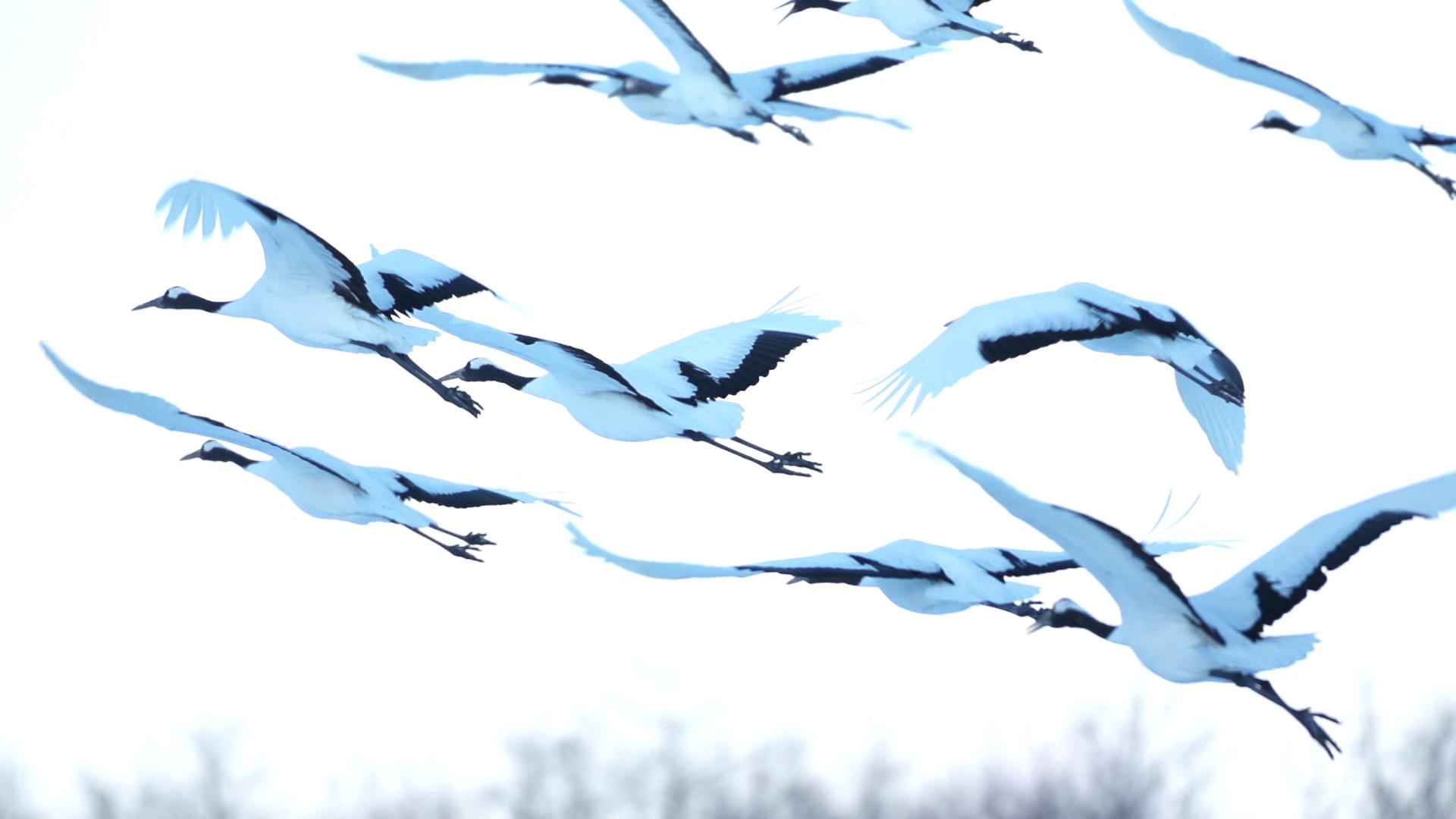 Cranes1.jpg