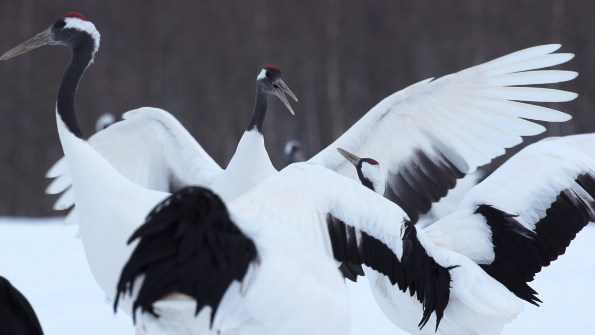 Cranes4.jpg