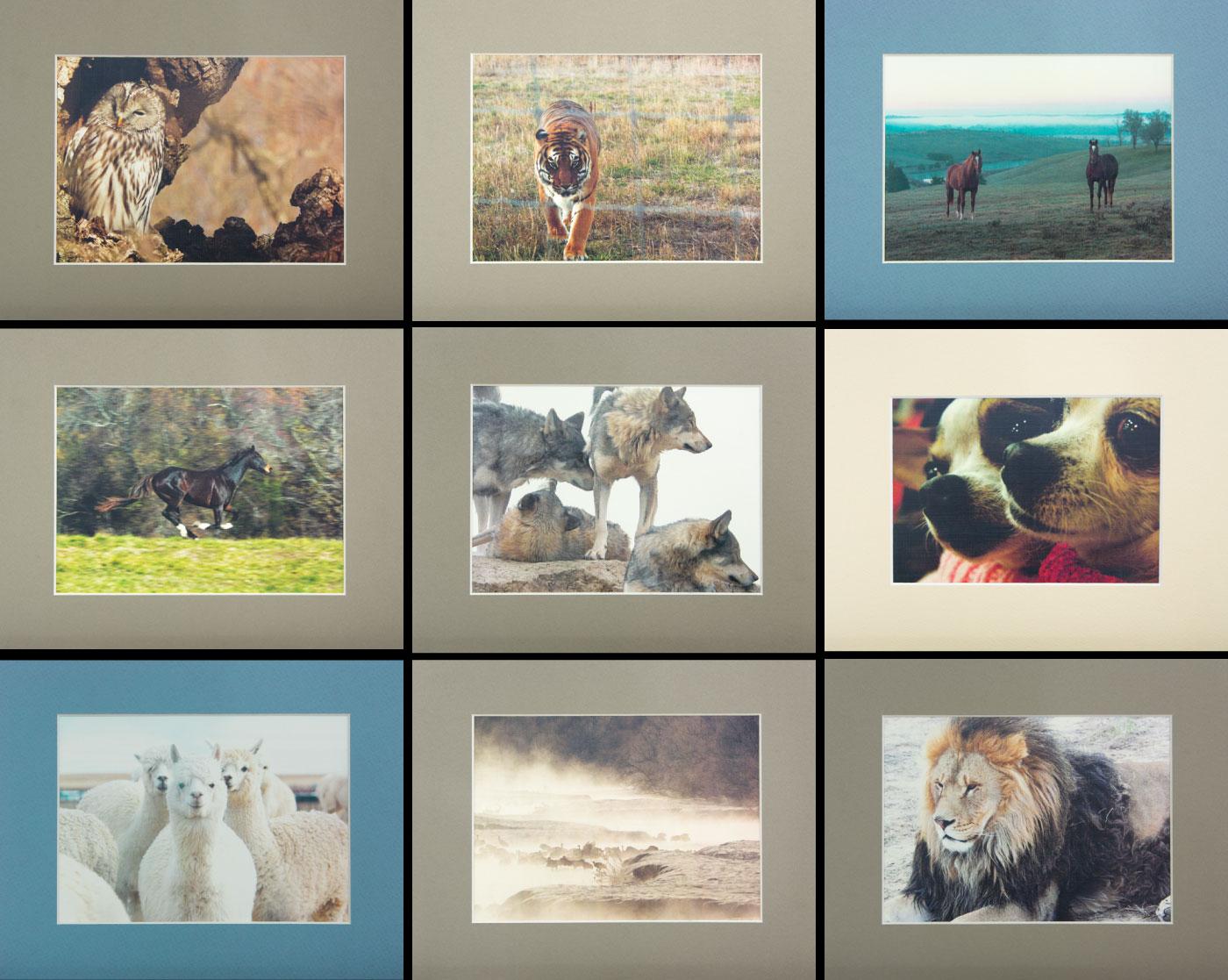 レスキューされた動物達の尊厳に感動しよう。「ステキ!」作品に登場した動物のマット台紙つき写真プリント