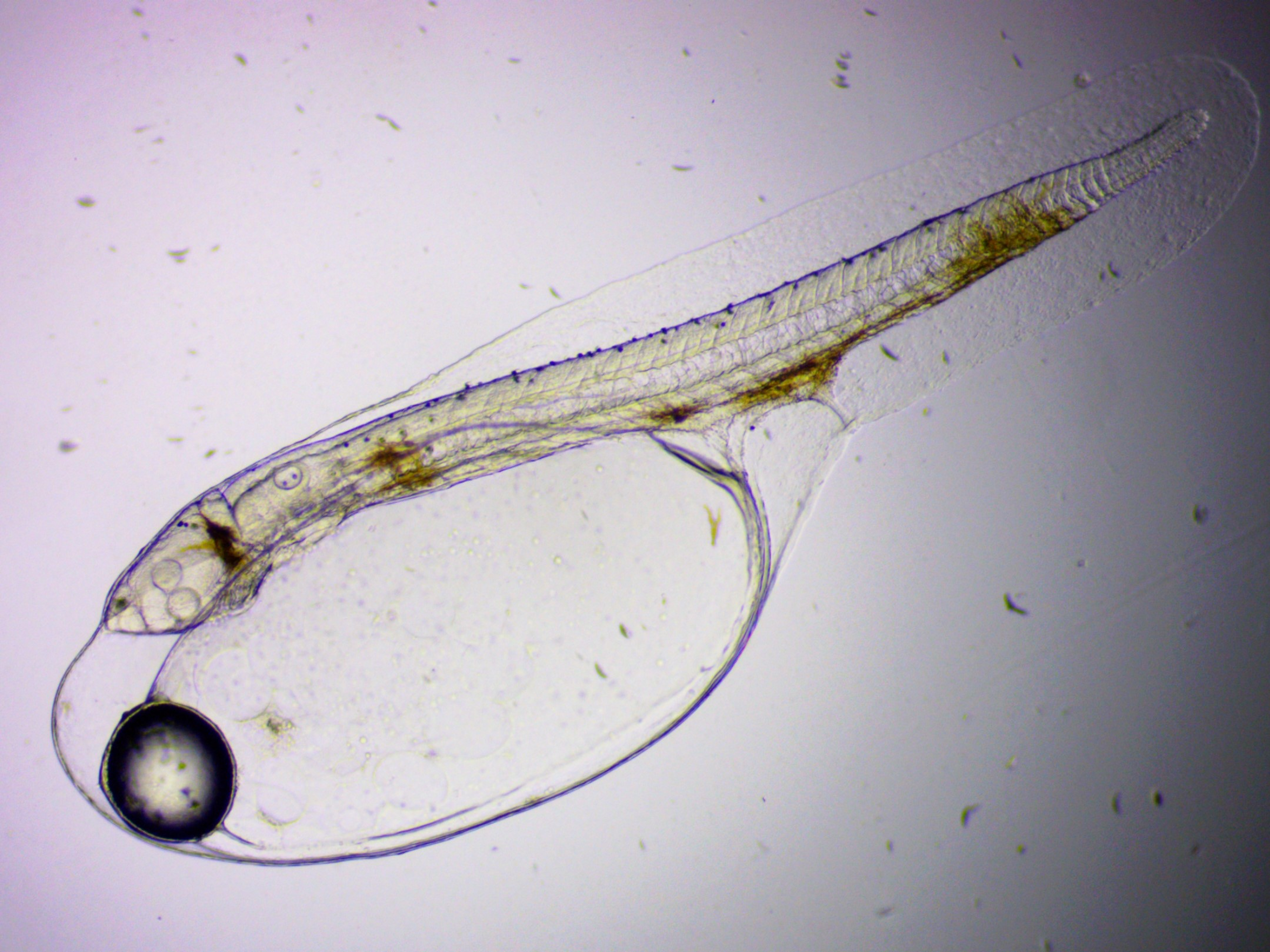21.26 1 Larvae no measurements.jpg
