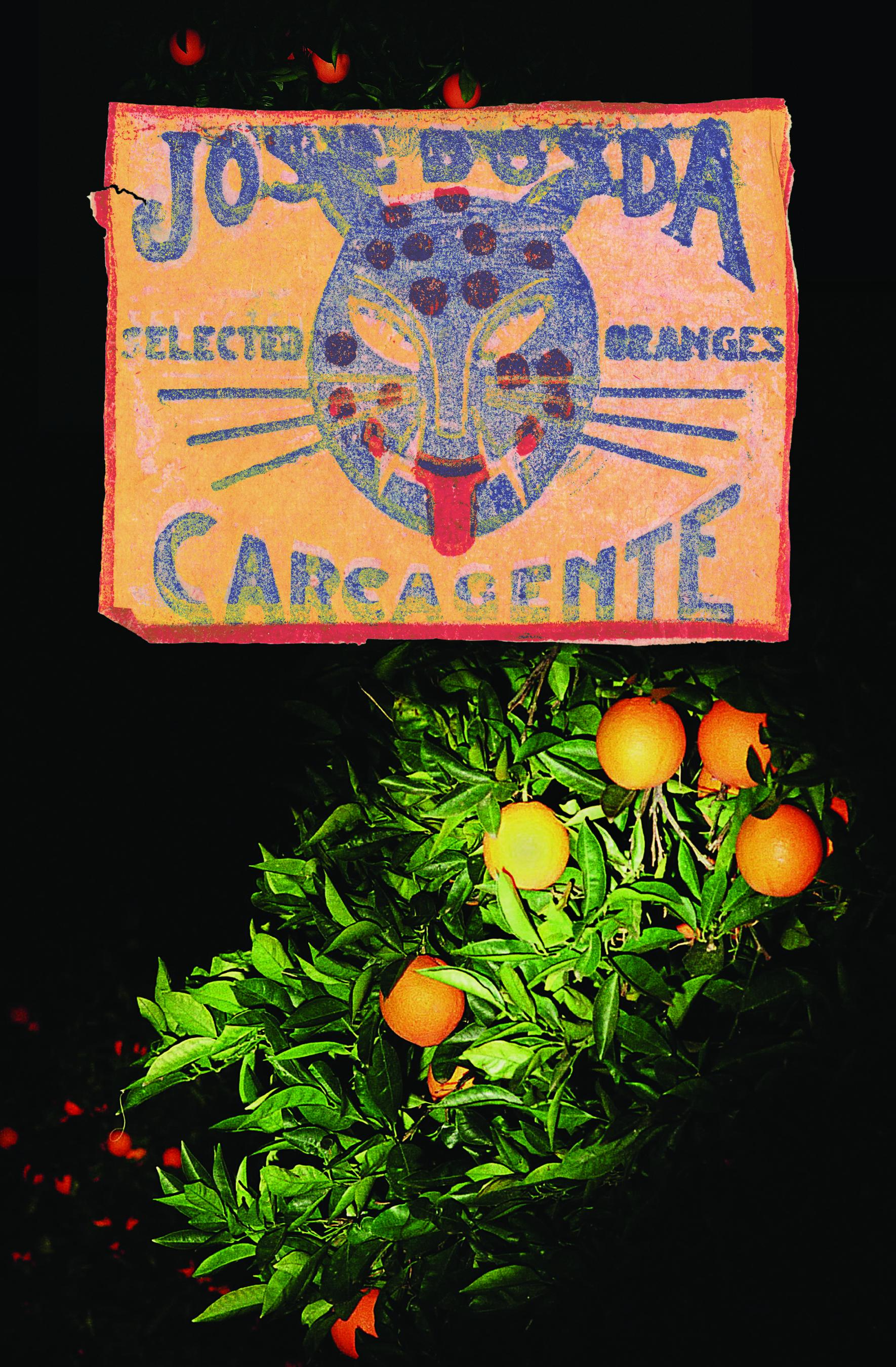 The Cat and oranges#1.jpg