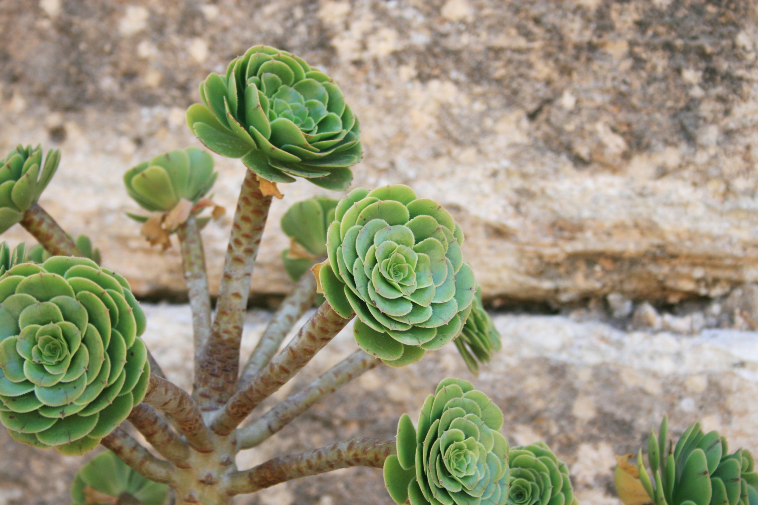 Succulent against Stone Wall