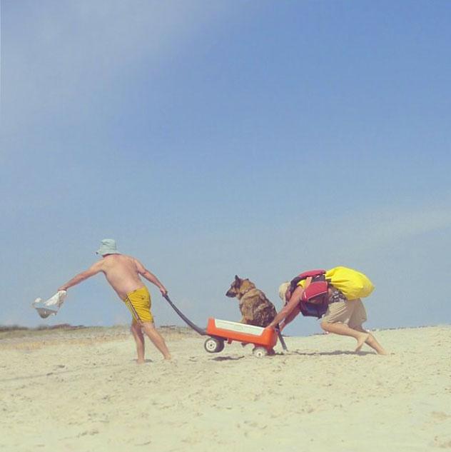 dog_beach_web.jpg