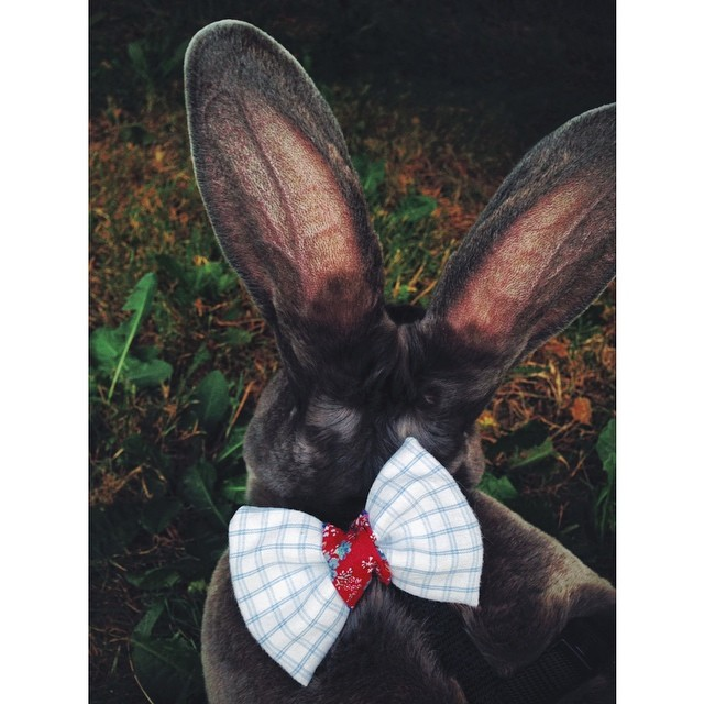 Peter Rabbit, looking incredibly dapper.