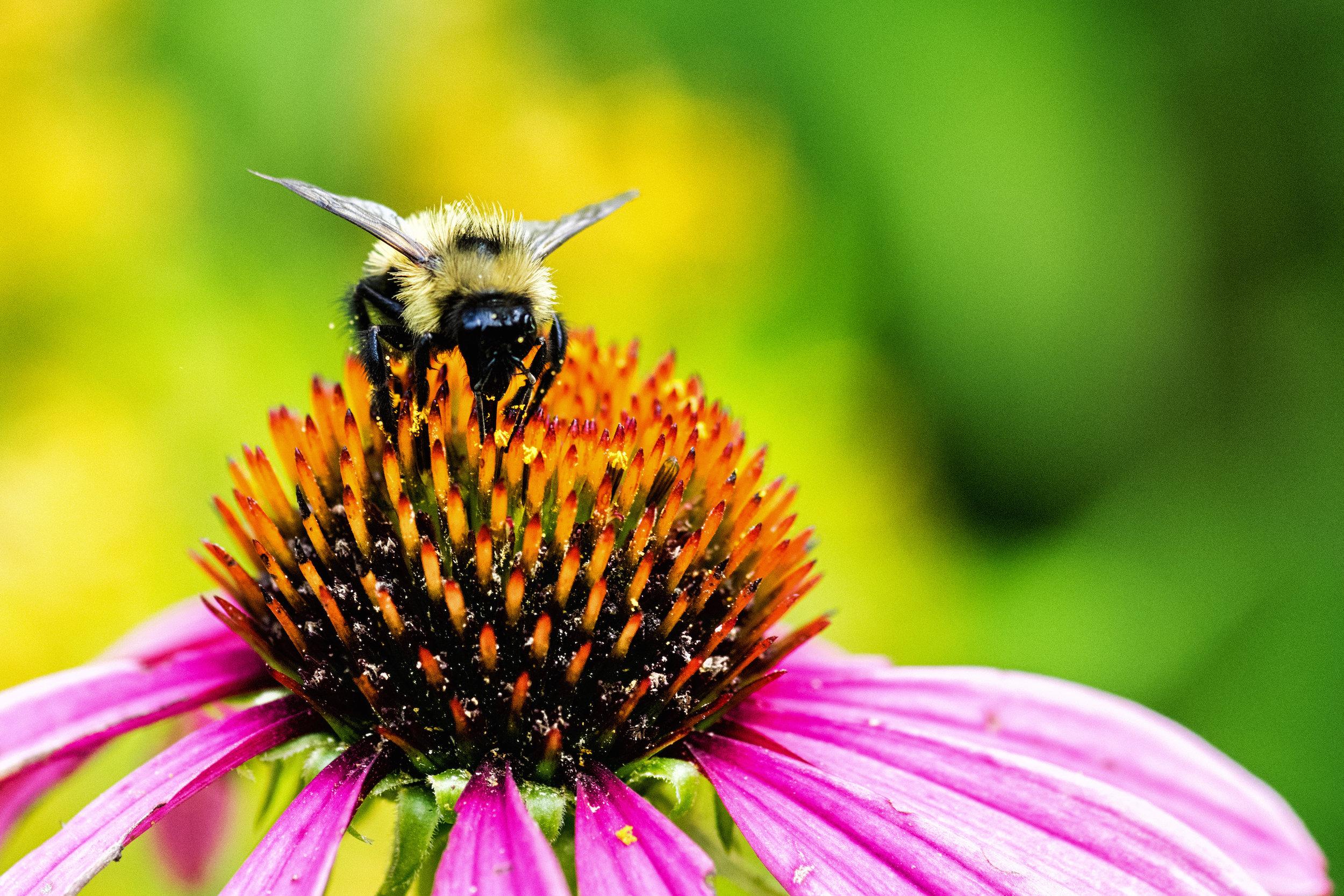 bee closeup 2.jpg