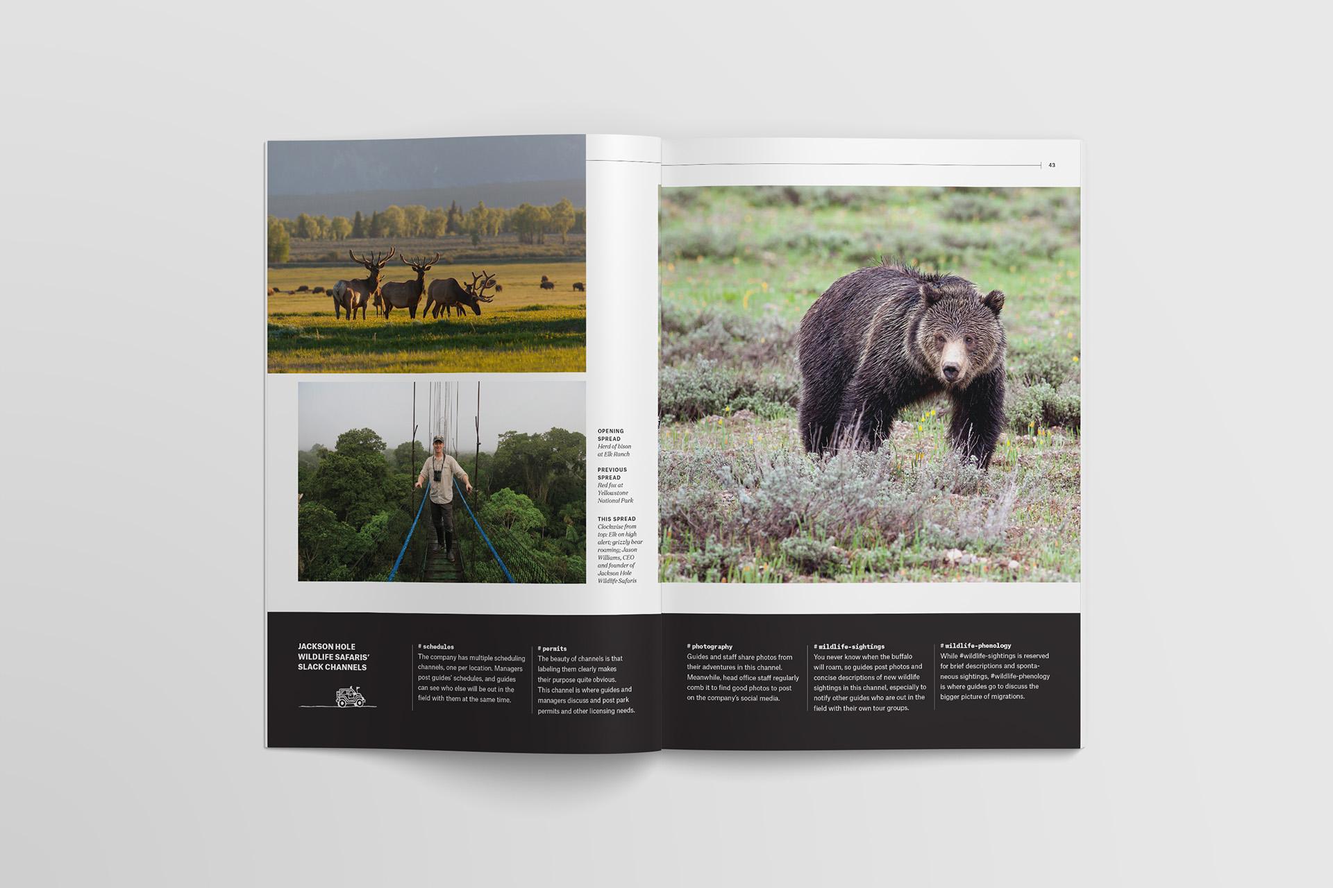 Slack Channels Wildlife Sightings Photo Essay 03