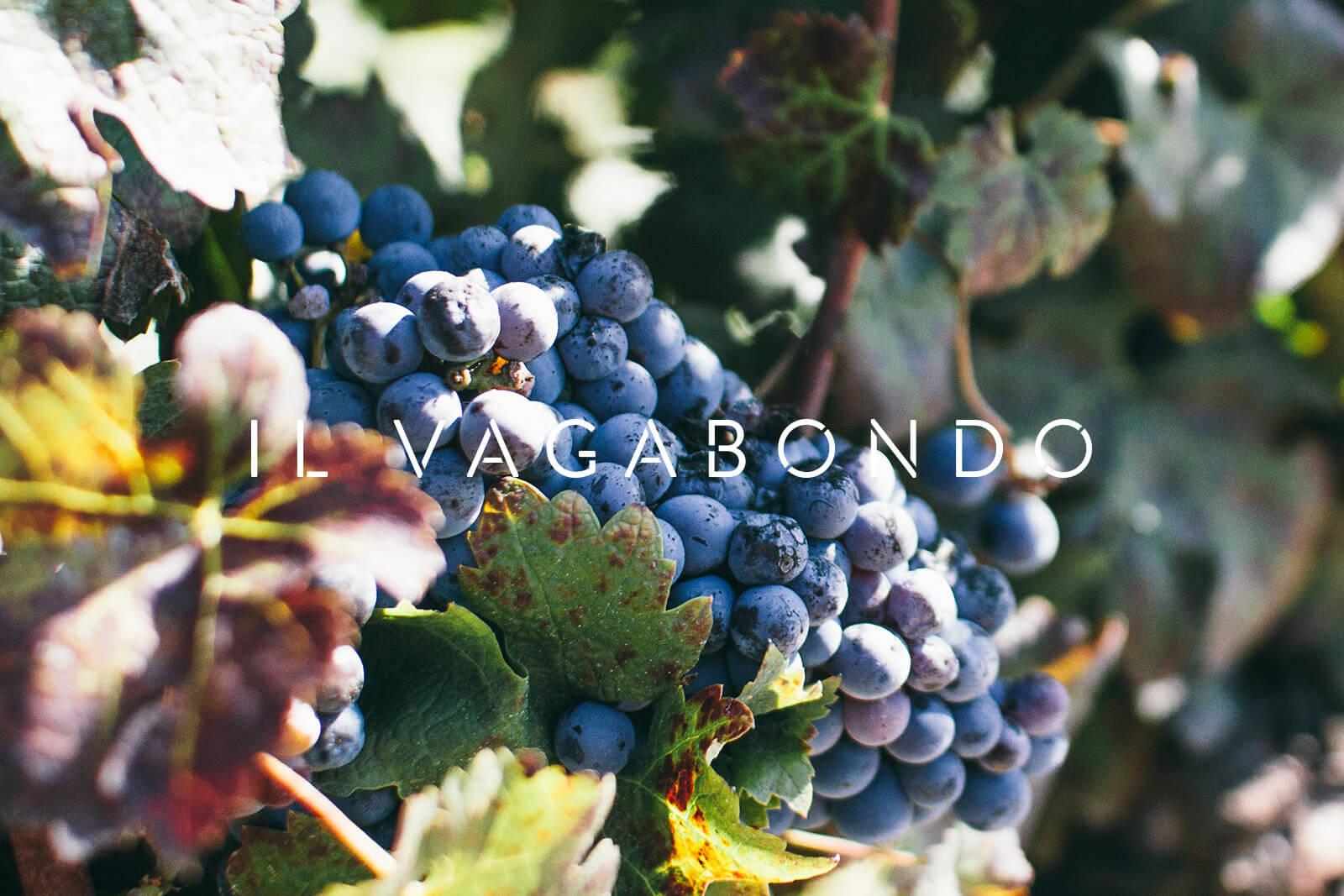 wine-branding-design.jpg