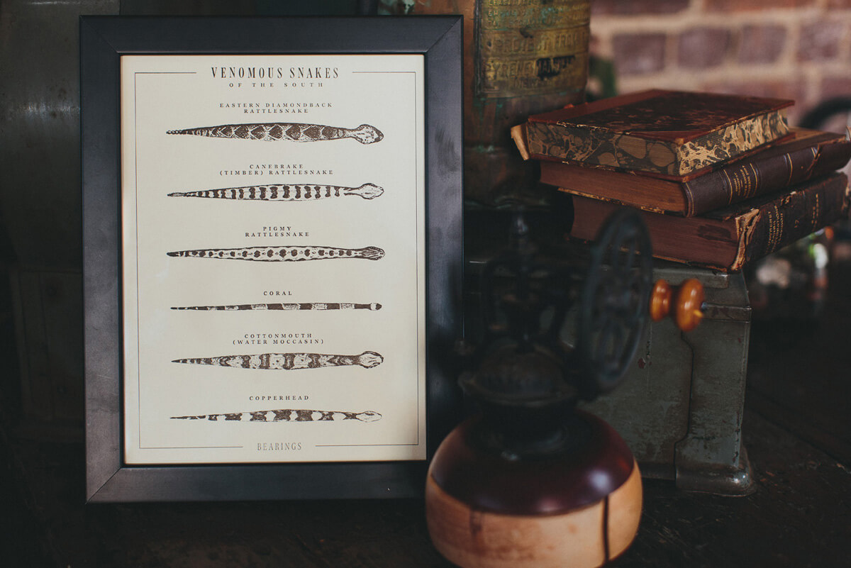 The Snakes of the South diagram illustration in letterpress fine art poster print is in a dark wood frame and photographed on a shelf next to a cactus.