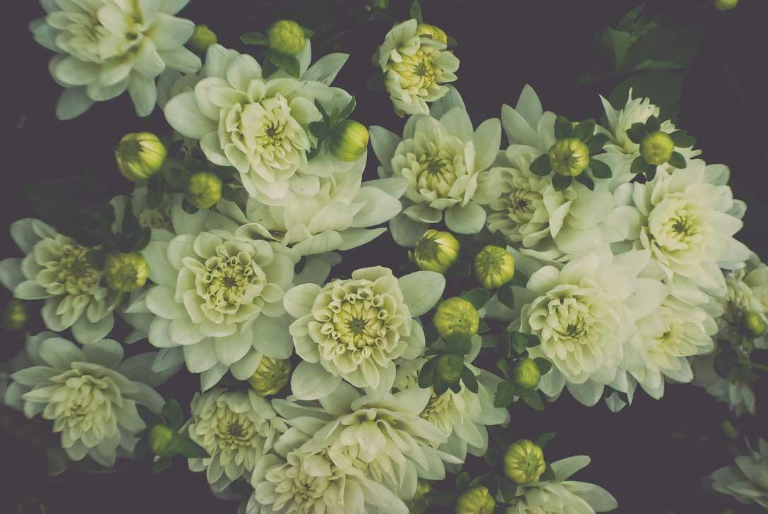 Flower-District-with-Zoe-2.jpg
