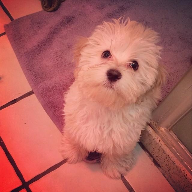 Got a puppy. This is Bella.