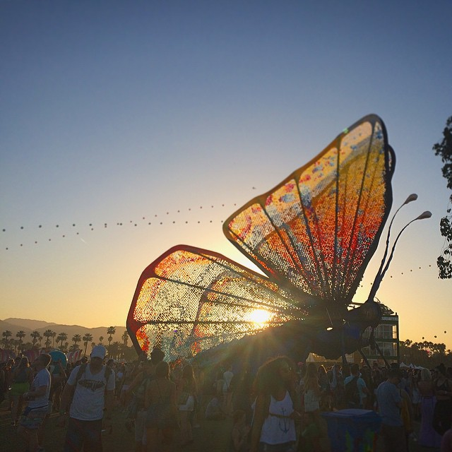 i-squealed-with-glee-on-coachella-day-three-when-i-realized-that-the-caterpie-evolved-into-a-beautiful-butterfree-also-i-rhymed-120365-sunset-in-the-desert-butterfly_16725862624_o.jpg
