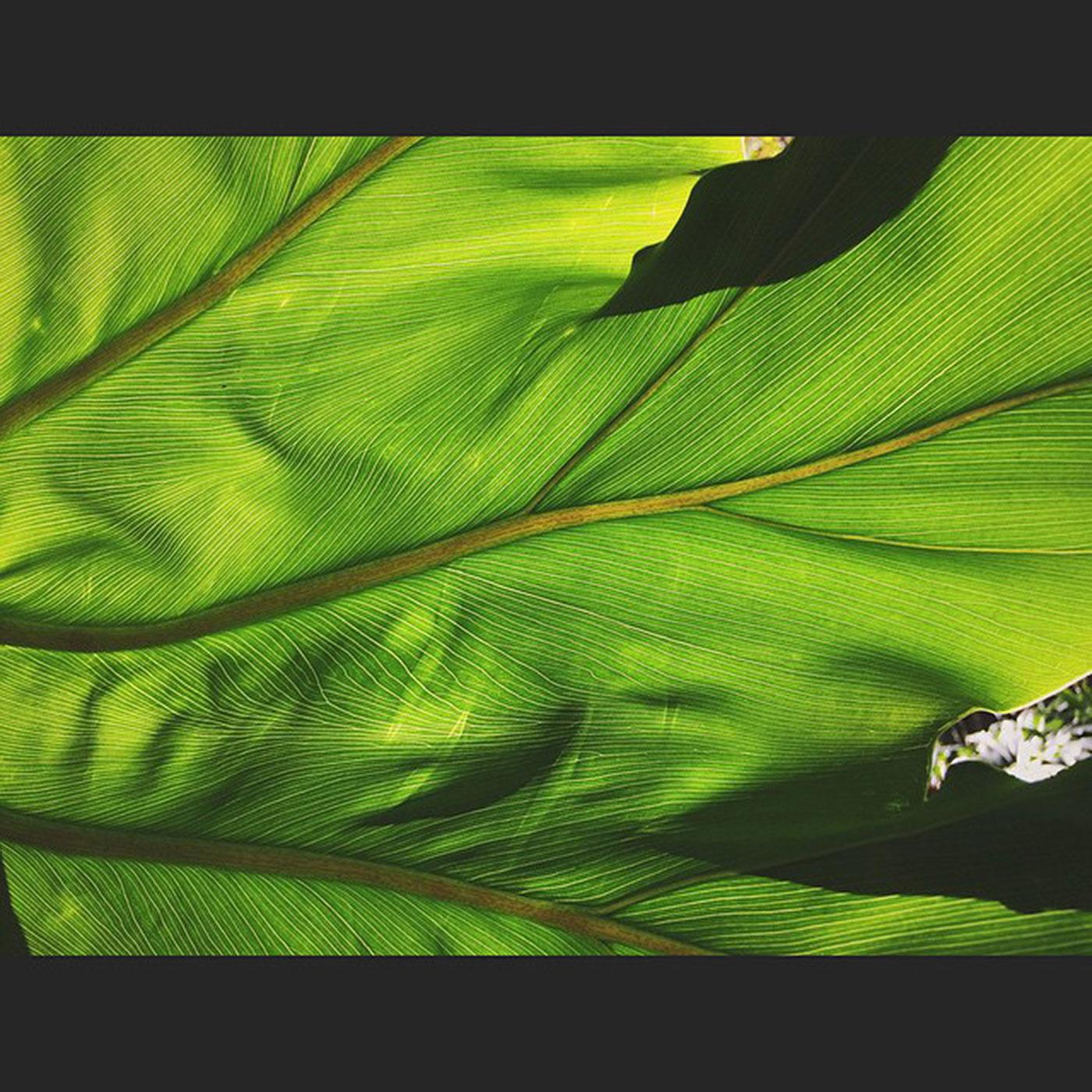 the-tropics-palms-veins-life-131365_17614575920_o.jpg