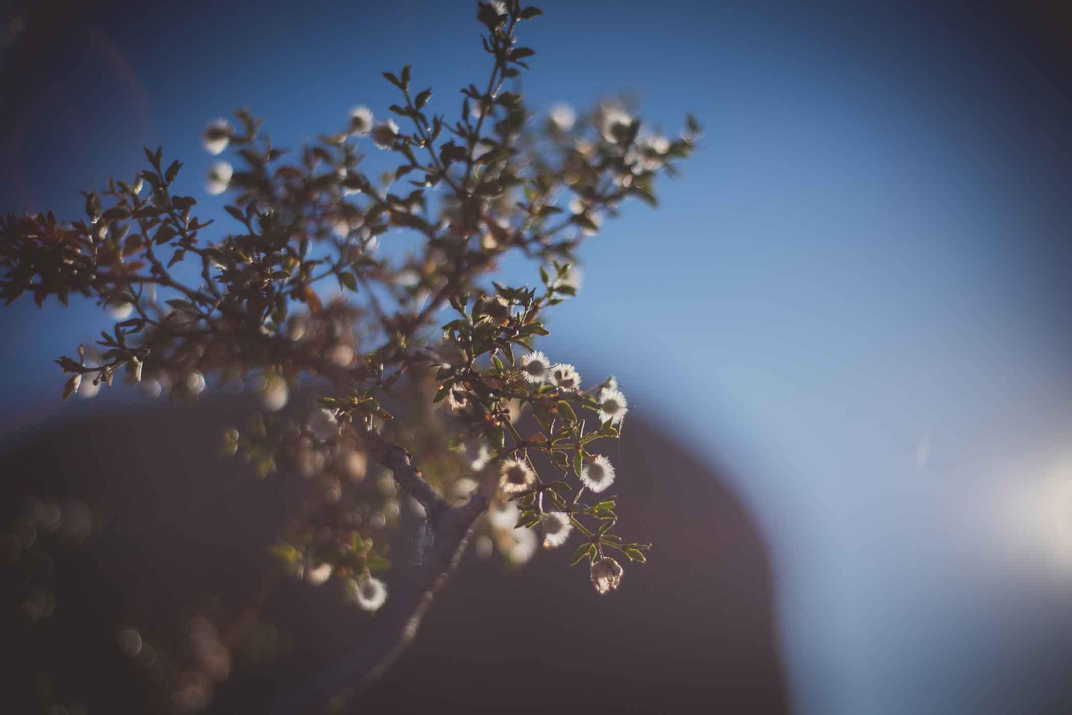 smlJoshua-Tree---Sept-2015-1.jpg