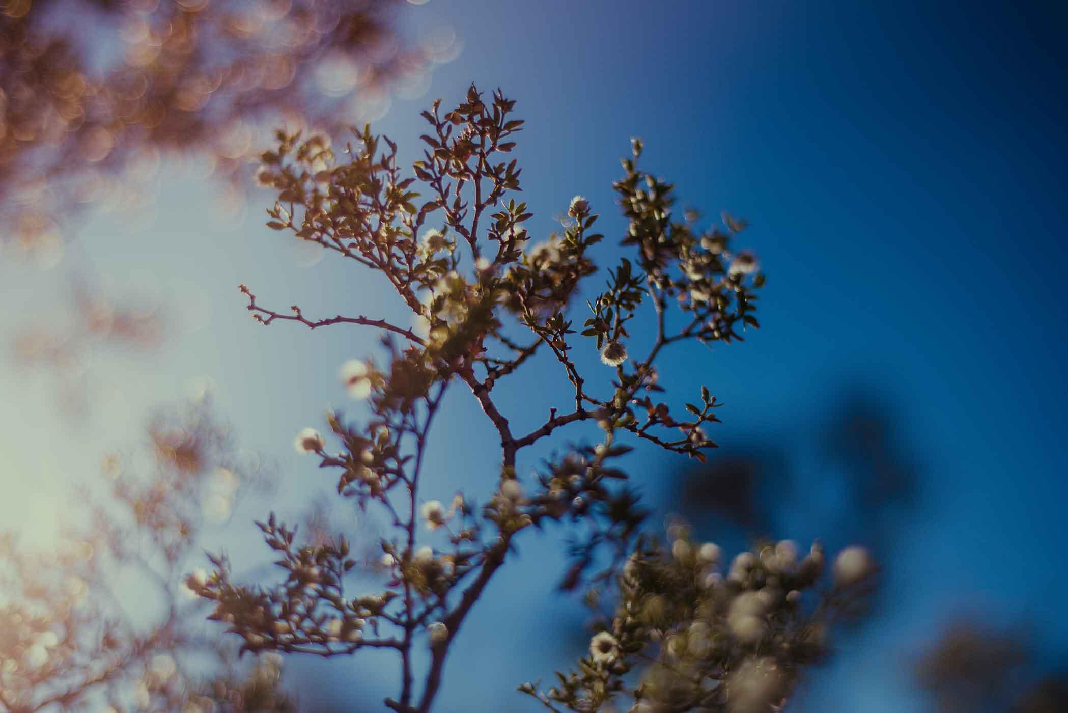 smlJoshua-Tree---Sept-2015-4.jpg