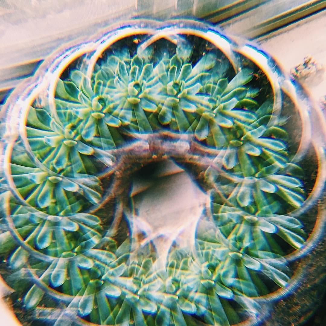 succulent-luv---donut-greenery-windowsill-garden-succulents-vsco-psychedelic-disco-futureeyes-futureeyes-xoxo--prismatic-prism-fishbowl-95366_26412968730_o.jpg