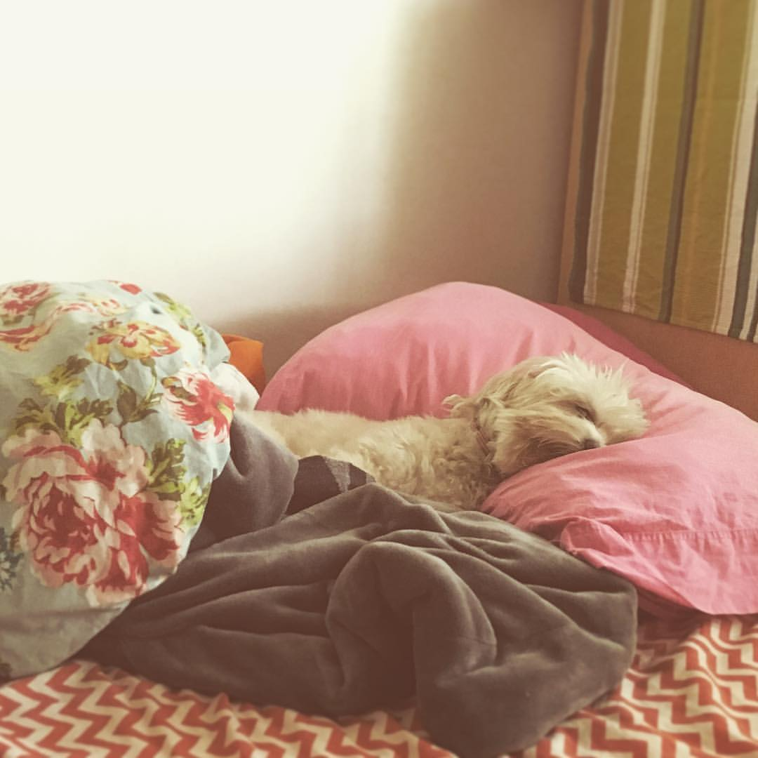 when-youre-at-work-and-all-you-really-wanna-be-doing-is-napping-obligatory-occasional-puppy-portrait-all-up-in-my-pillow-space-like-she-owns-the-place-124366-----snooze-comfy-dogsofinstagram-bed-puppynap-naptime-precious-shutey_26858965763_o.jpg