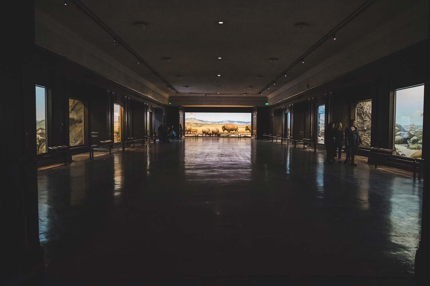 sNatural-History-Museum---Feb-2017-46.jpg