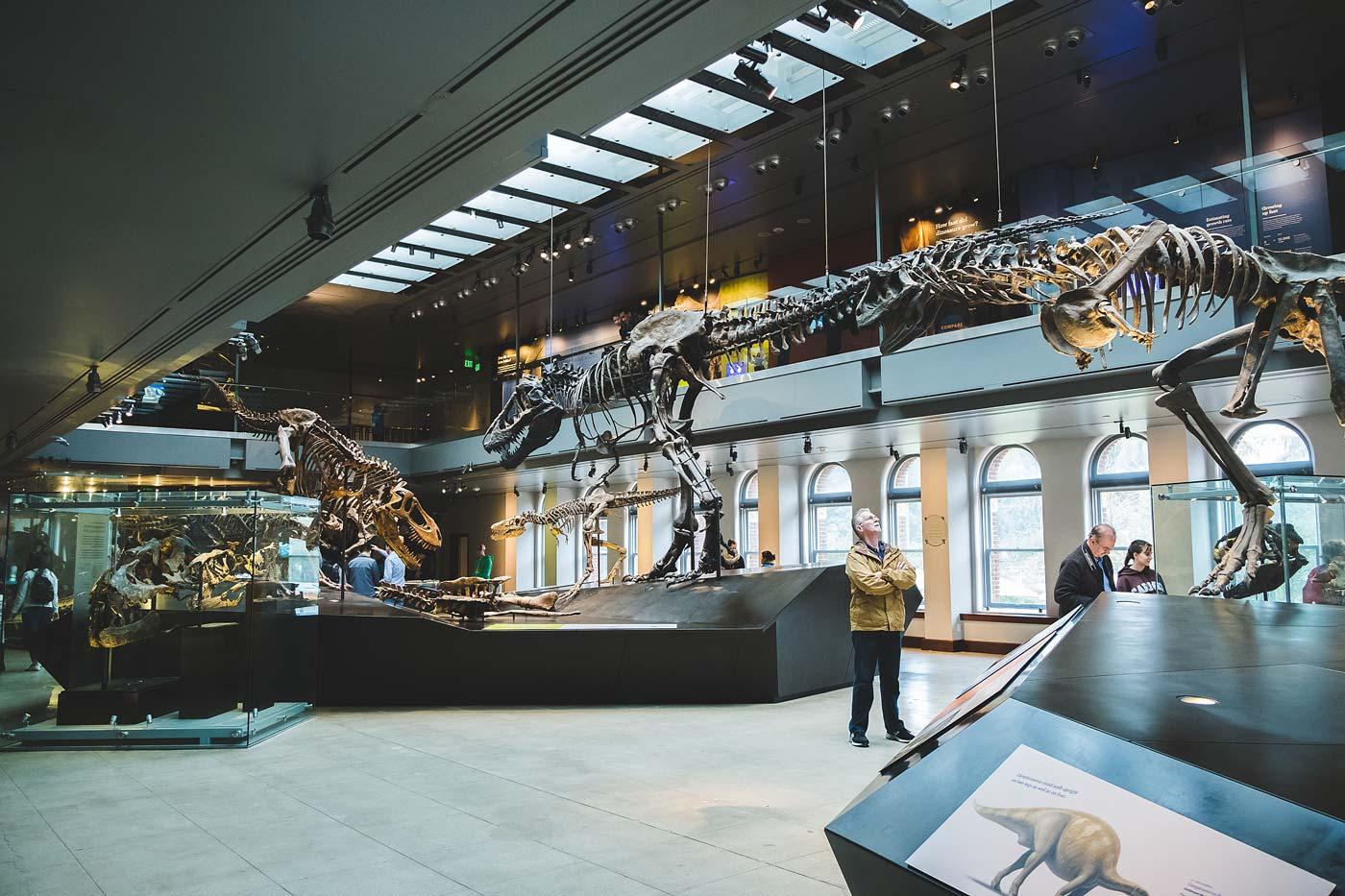 sNatural-History-Museum---Feb-2017-78.jpg