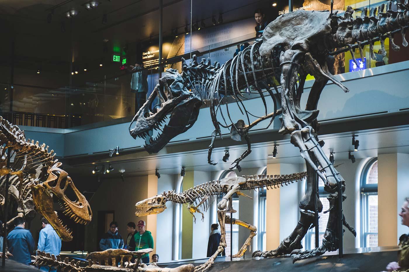 sNatural-History-Museum---Feb-2017-79.jpg