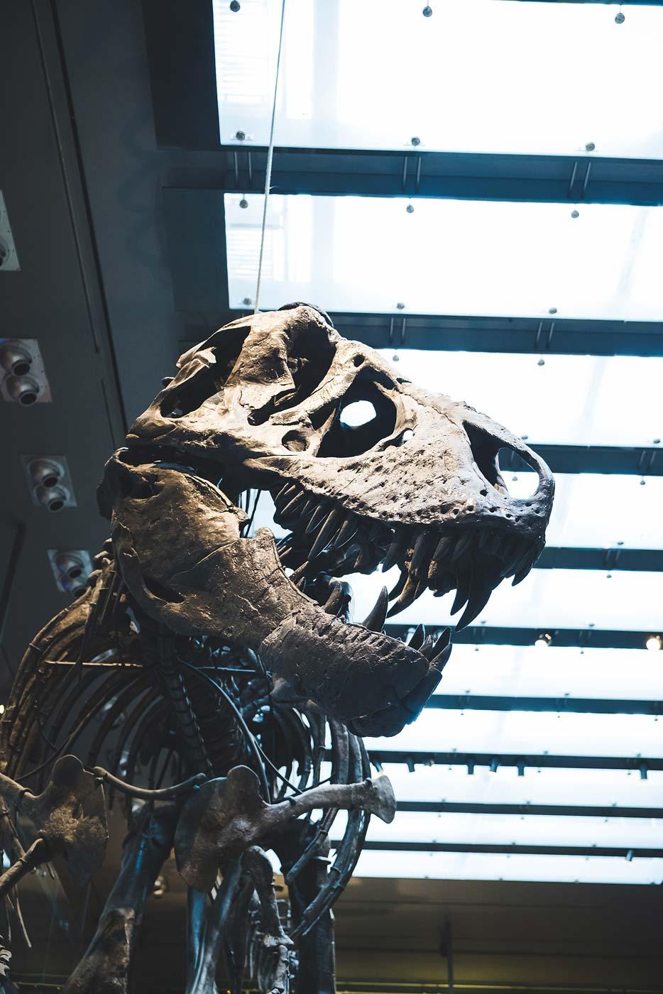 sNatural-History-Museum---Feb-2017-85.jpg