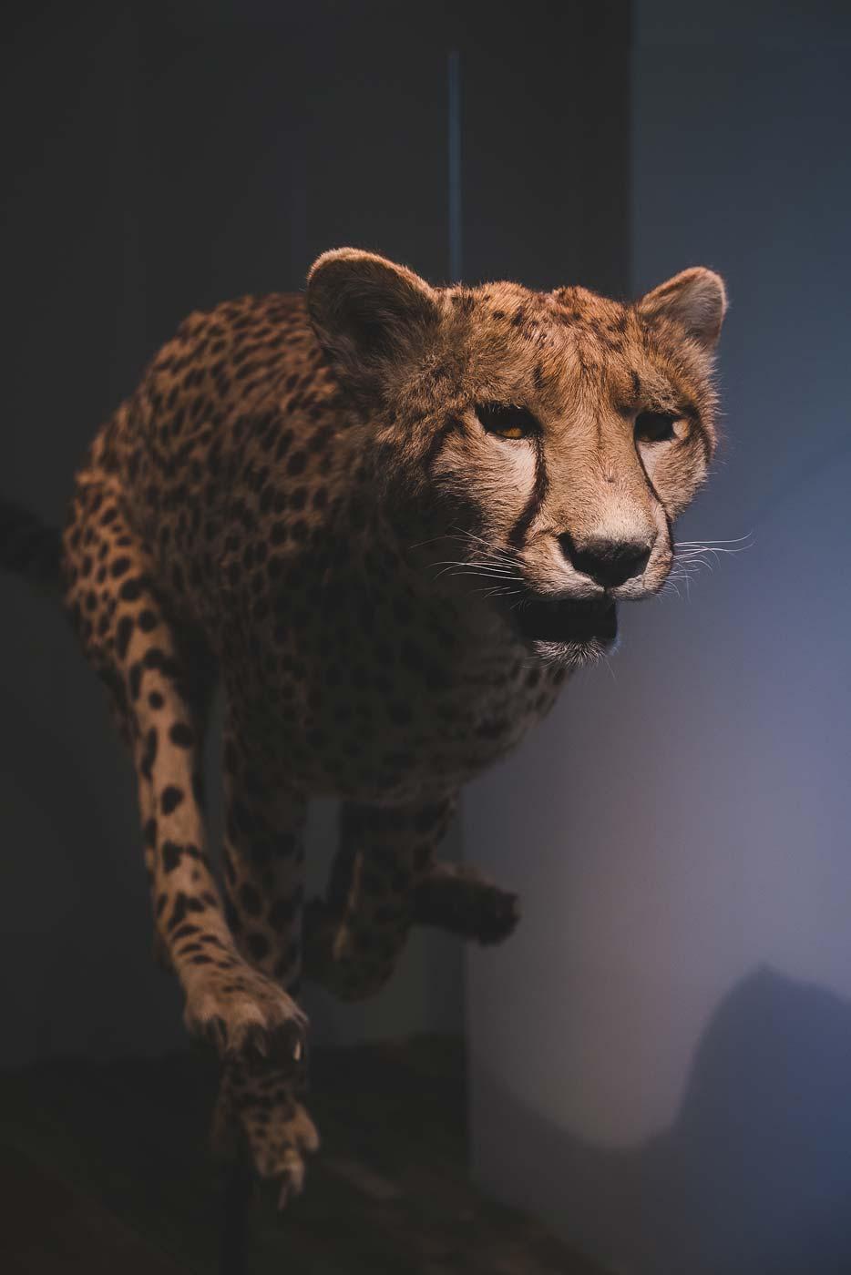 sNatural-History-Museum---Feb-2017-90.jpg