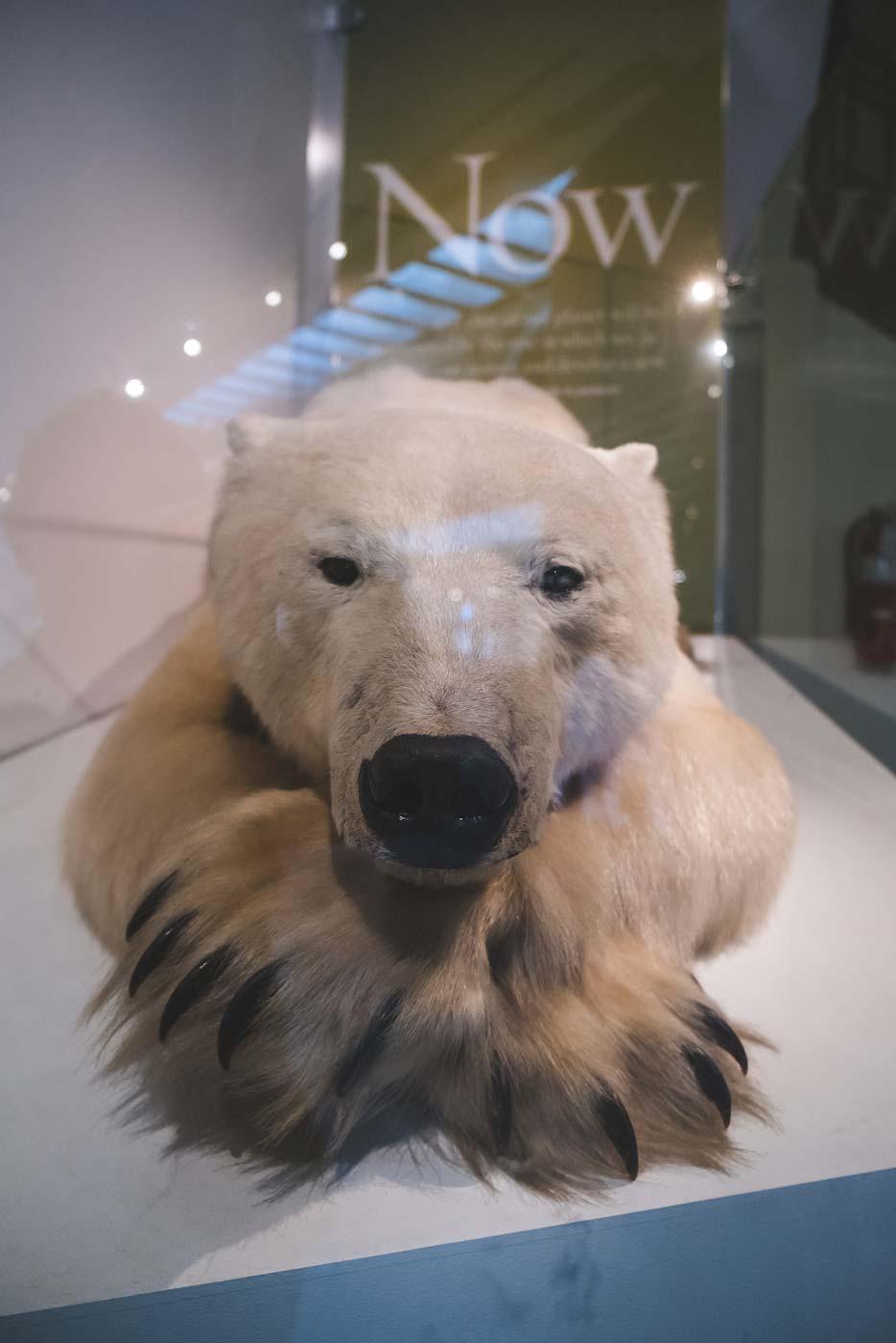 sNatural-History-Museum---Feb-2017-98.jpg