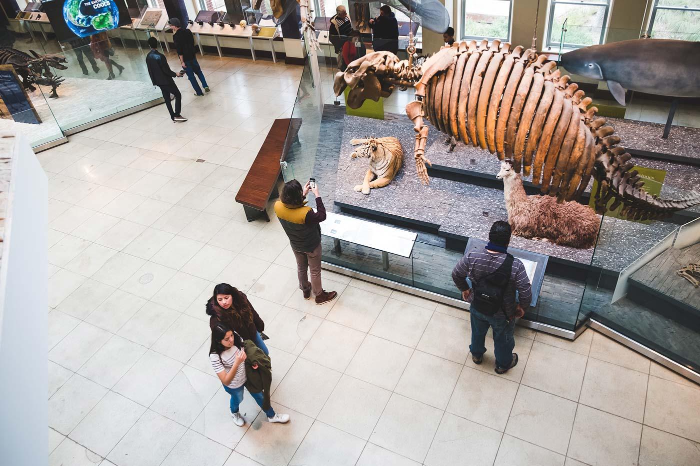 sNatural-History-Museum---Feb-2017-103.jpg