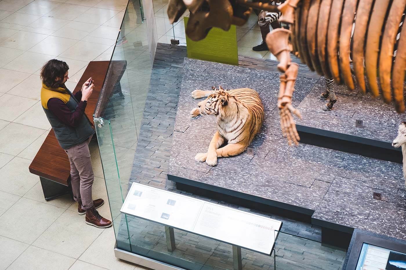 sNatural-History-Museum---Feb-2017-104.jpg