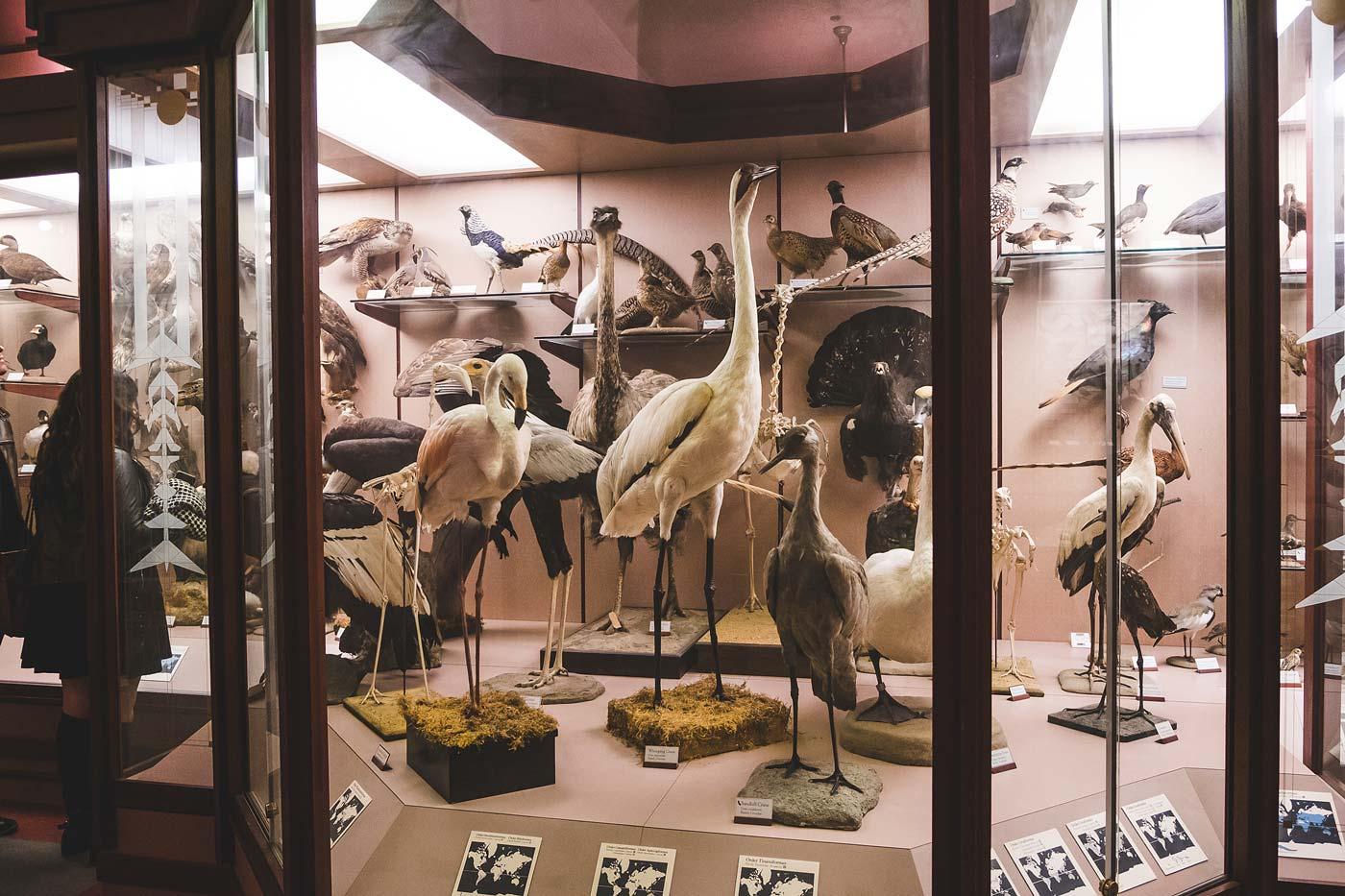 sNatural-History-Museum---Feb-2017-146.jpg