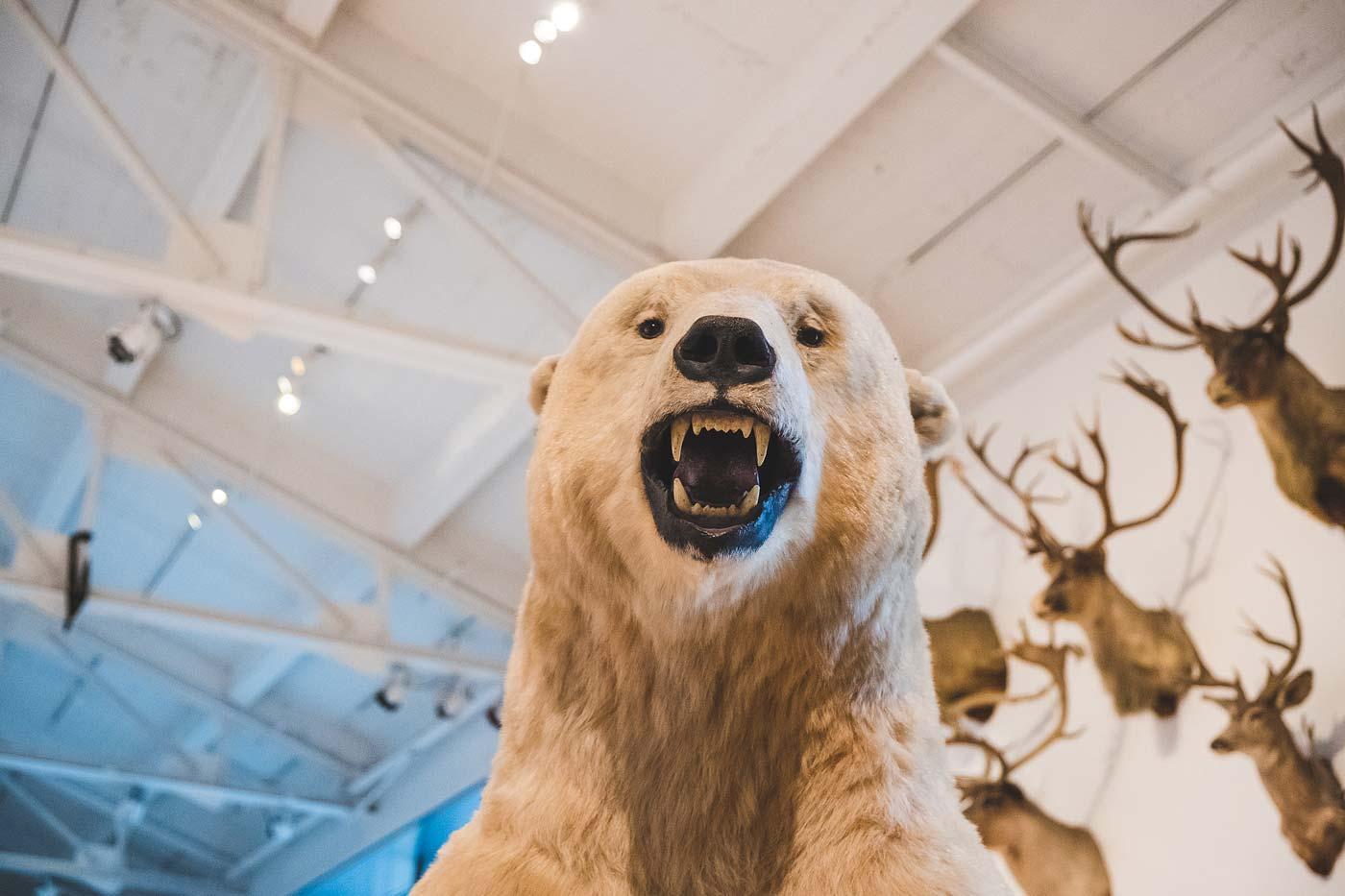 sNatural-History-Museum---Feb-2017-157.jpg