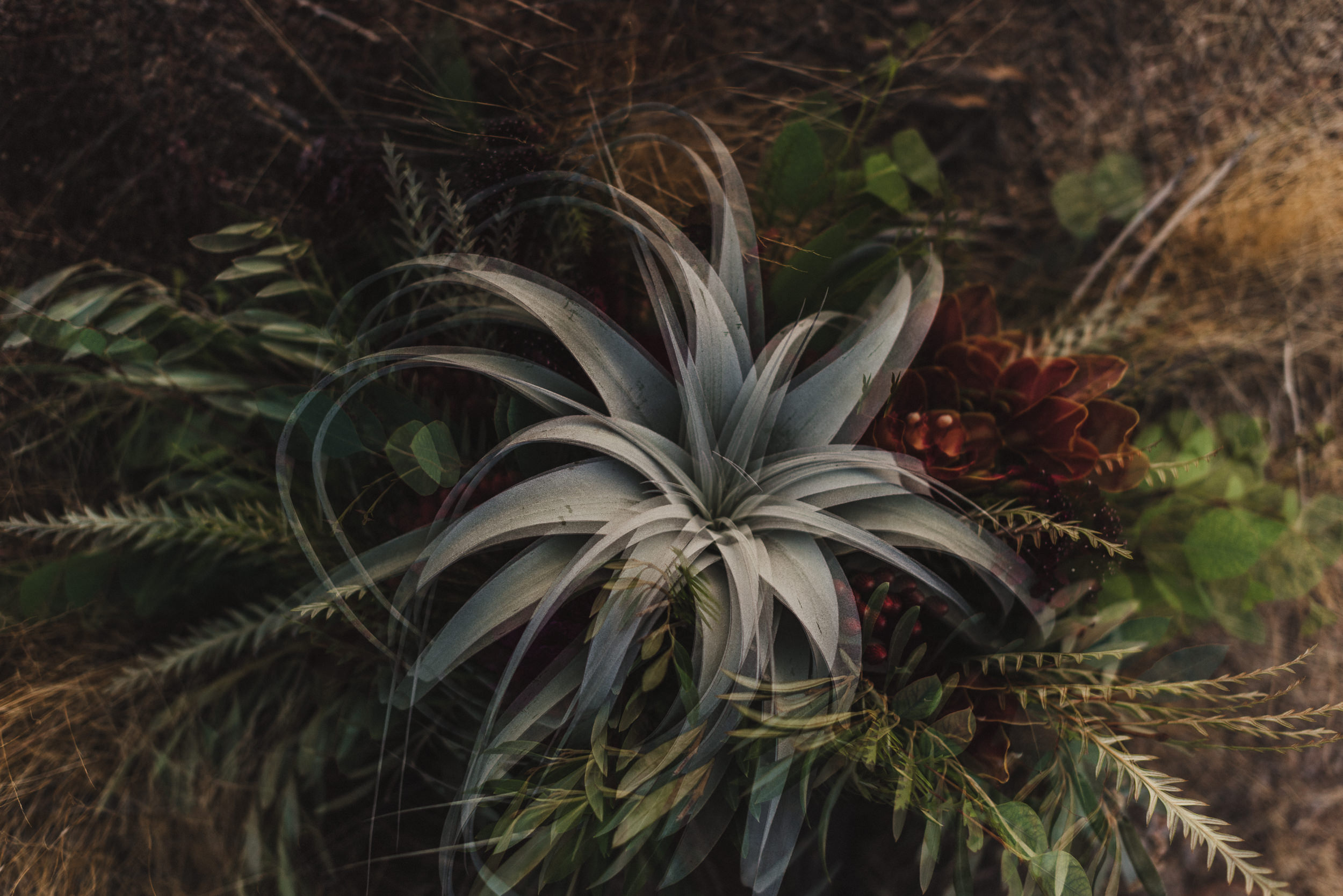 sMagdalena + Yoan - Elopement, Joshua Tree CA-70.jpg