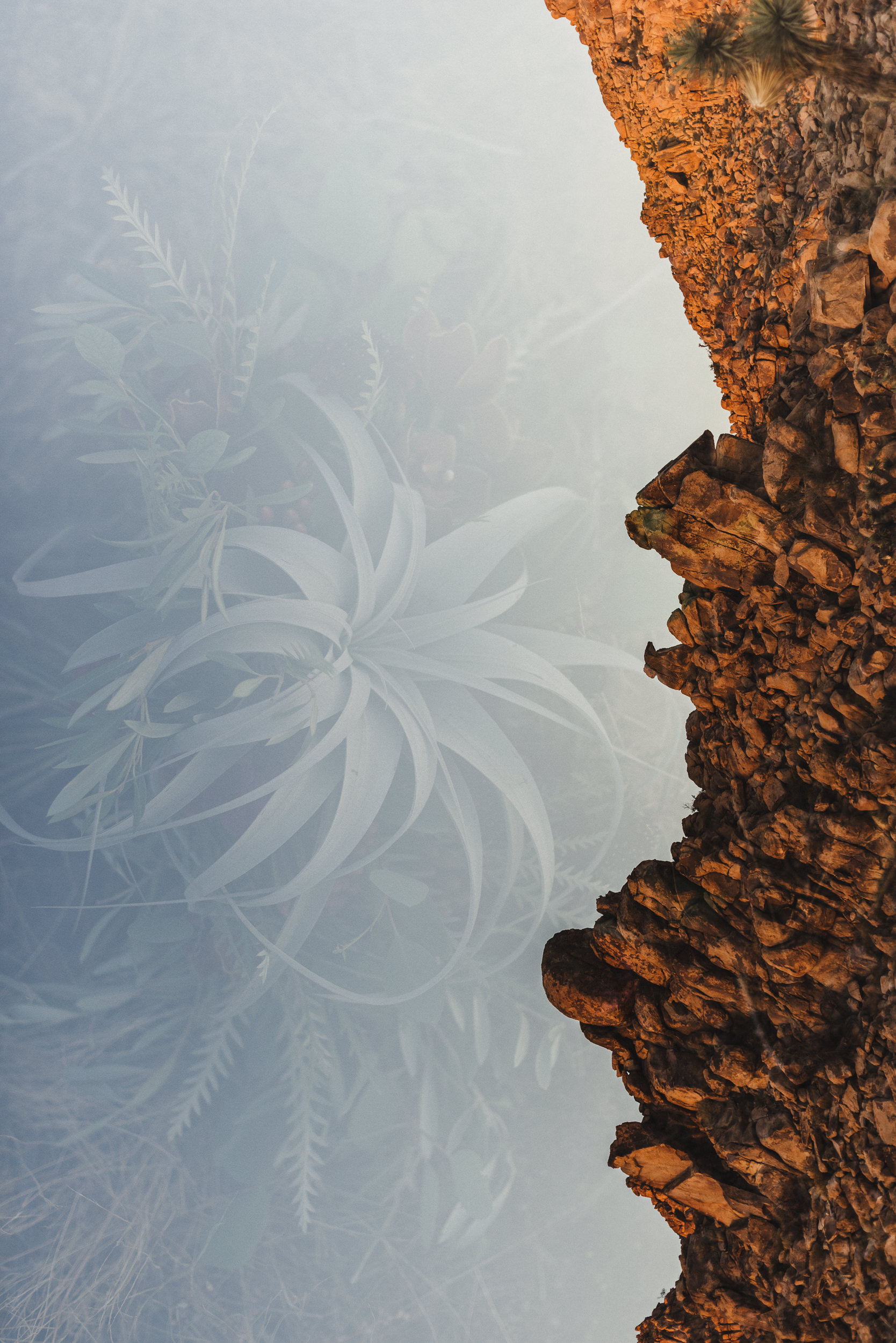 sMagdalena + Yoan - Elopement, Joshua Tree CA-71.jpg