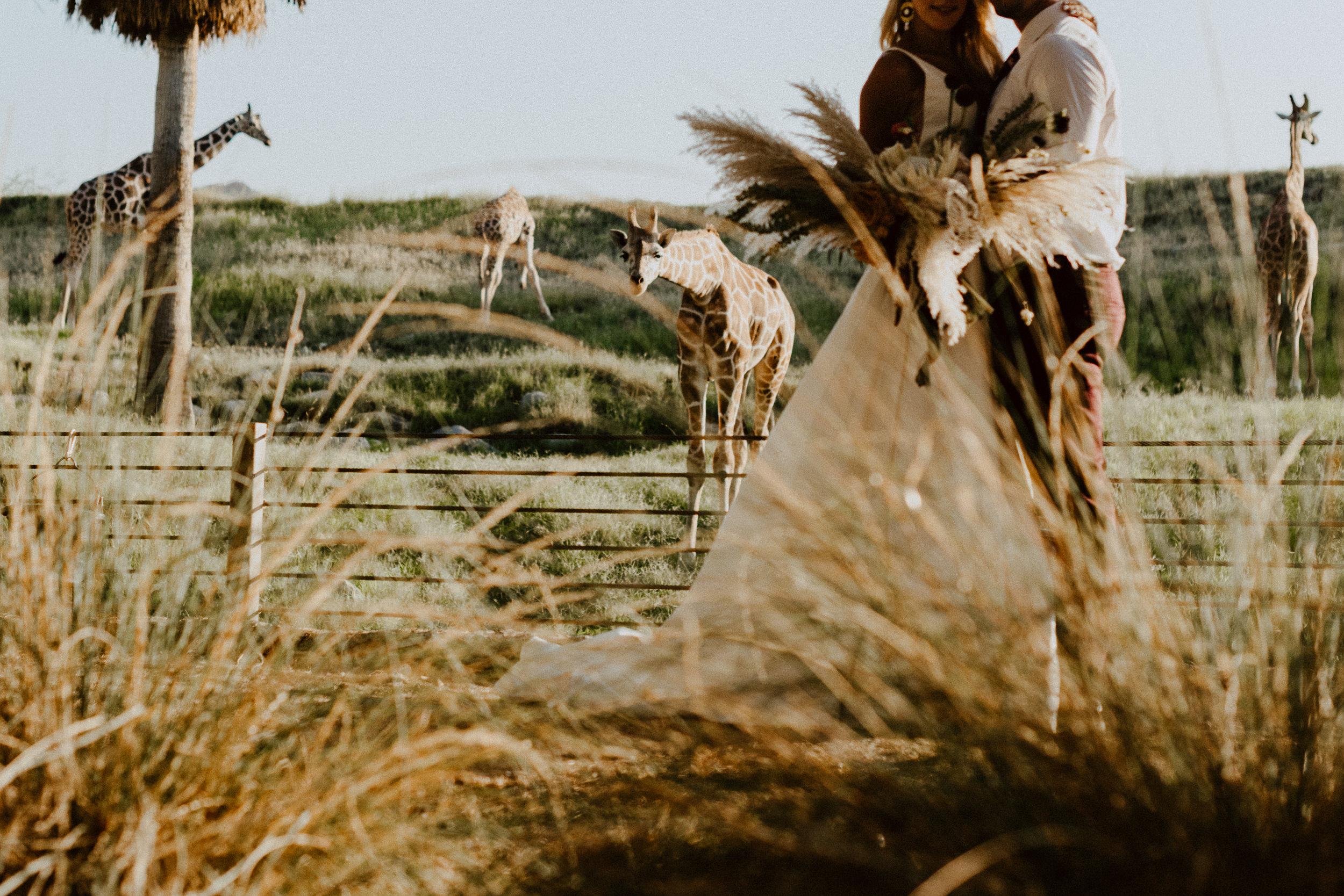 sChelsie + Chris - The Desert Shootout Wedding Romantics at The Living Desert-84.jpg