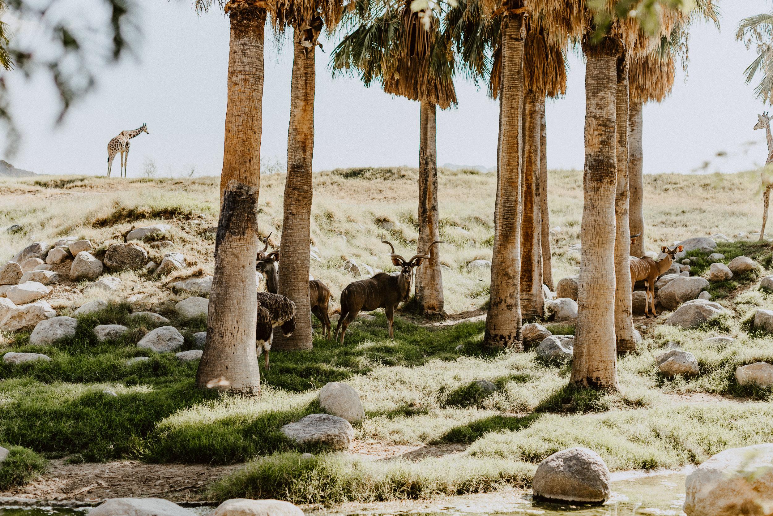 sSetting + Scenery - The Desert Shootout - The Living Desert-10.jpg