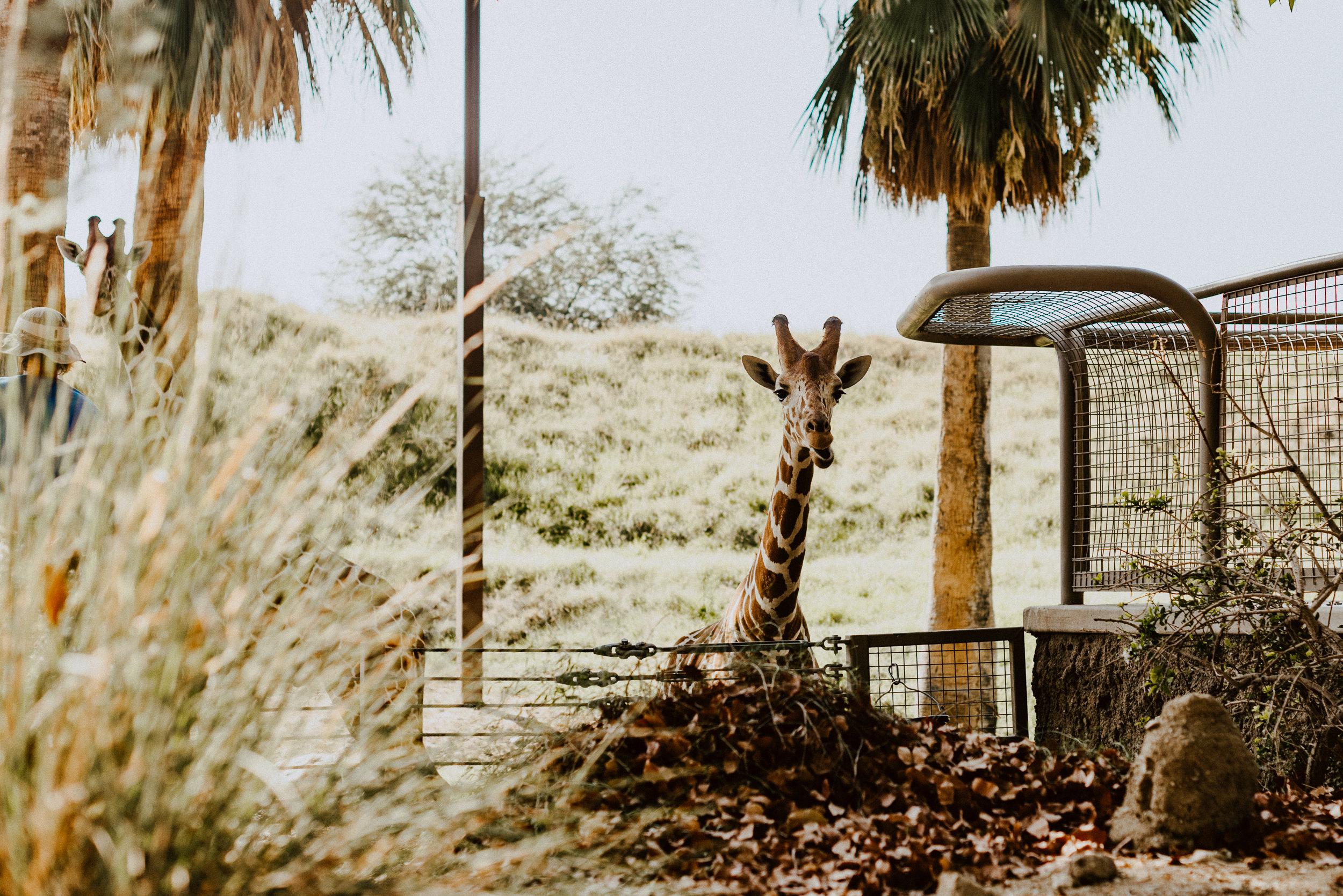 sSetting + Scenery - The Desert Shootout - The Living Desert-11.jpg