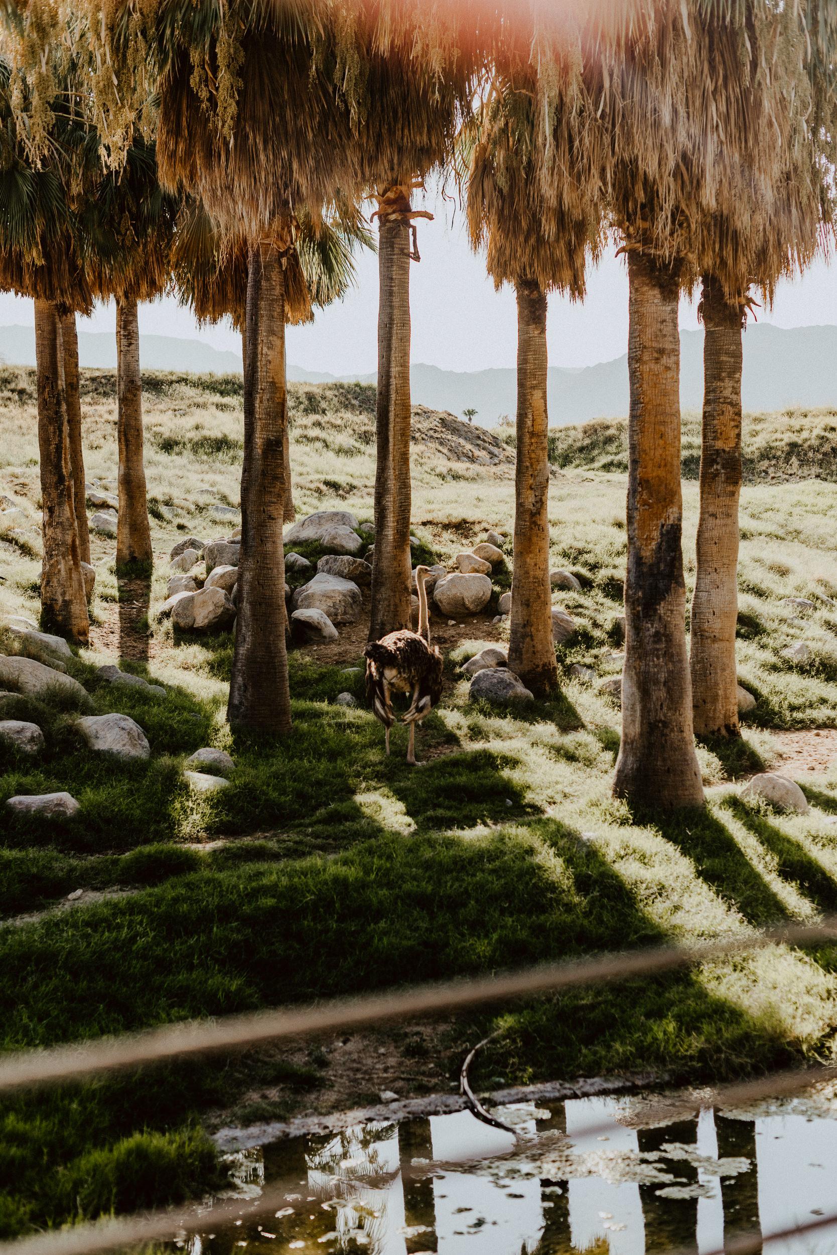 sSetting + Scenery - The Desert Shootout - The Living Desert-32.jpg