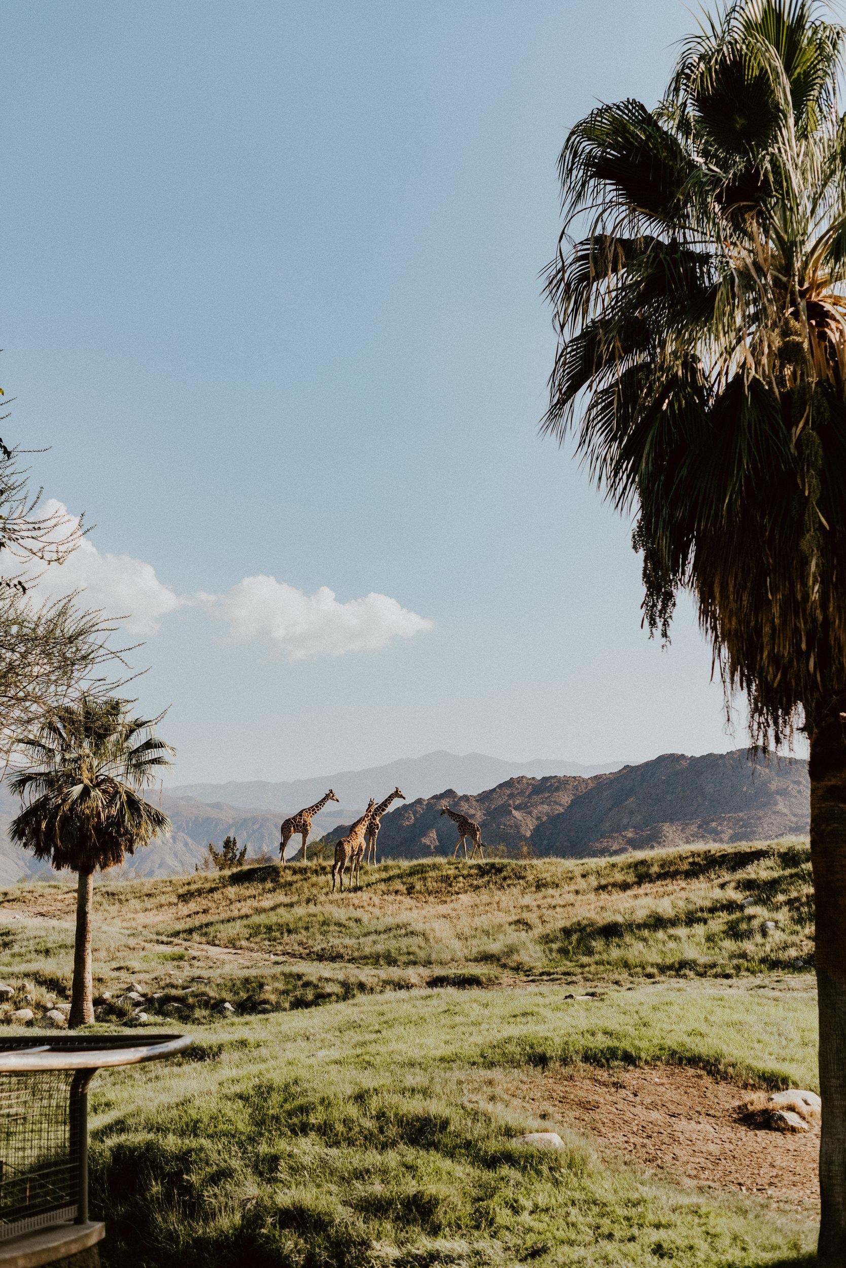 sSetting + Scenery - The Desert Shootout - The Living Desert-29.jpg