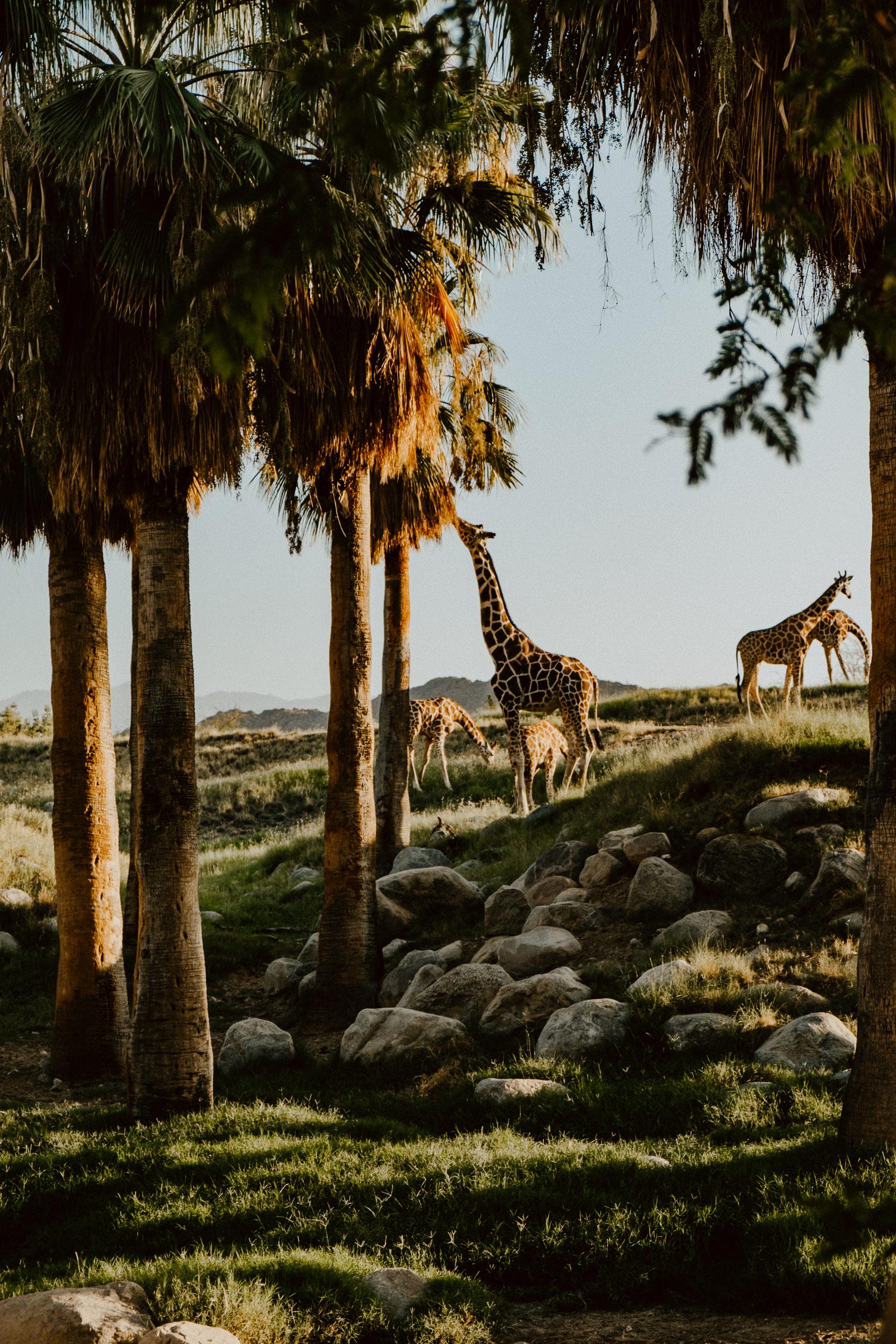 sSetting + Scenery - The Desert Shootout - The Living Desert-36.jpg