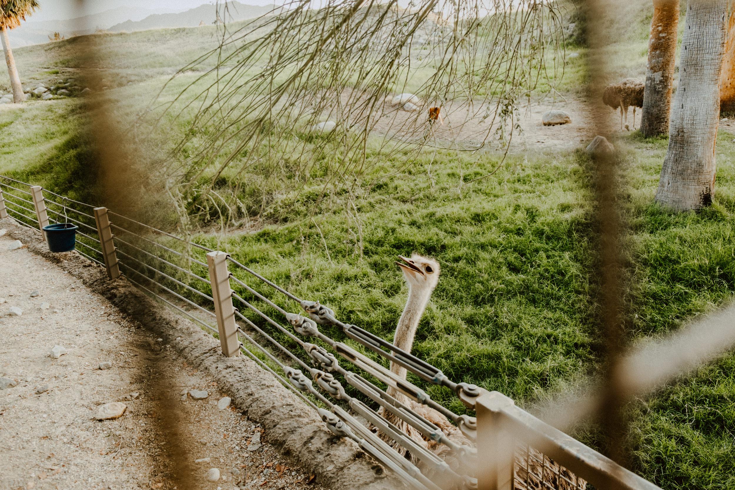 sSetting + Scenery - The Desert Shootout - The Living Desert-39.jpg