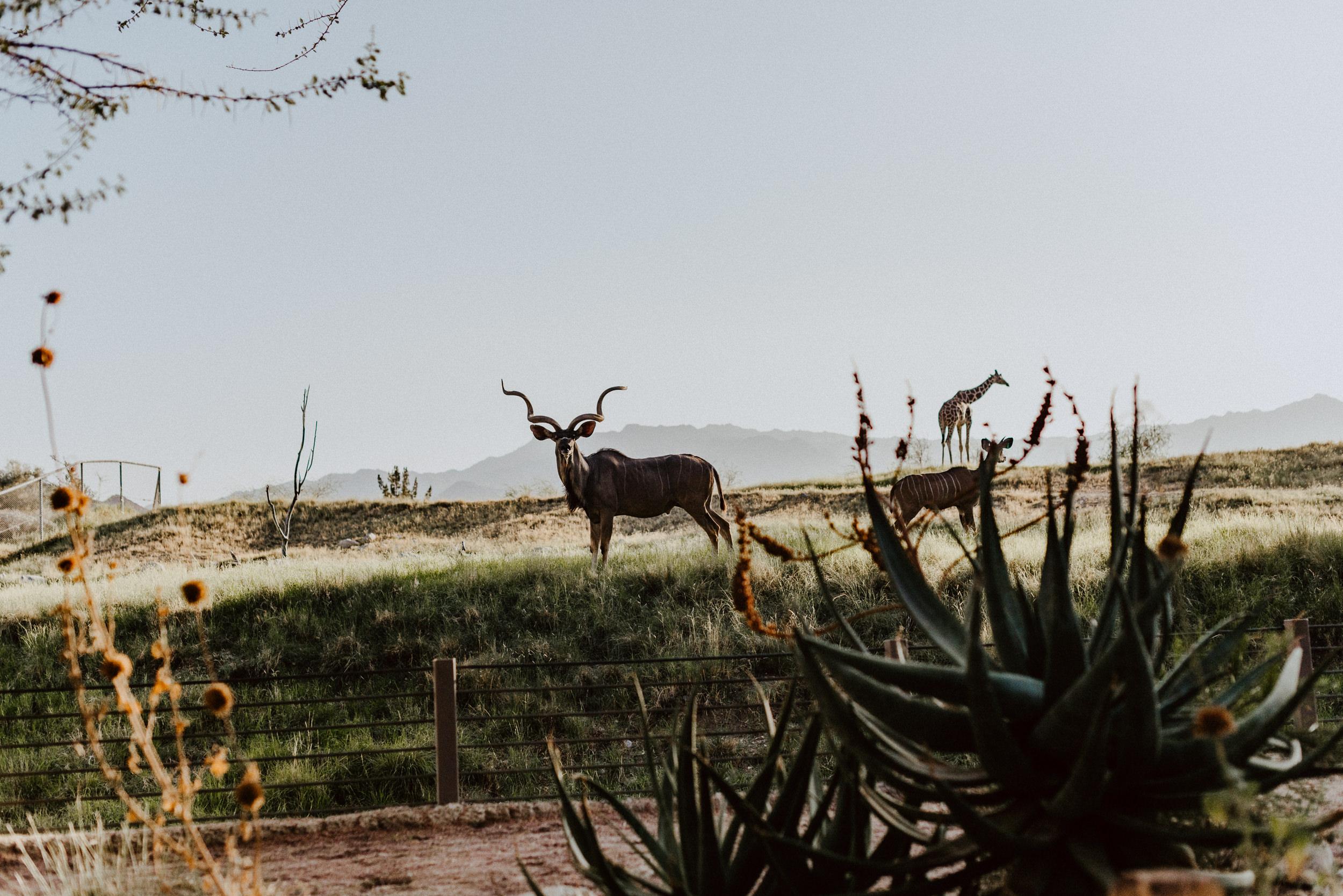 sSetting + Scenery - The Desert Shootout - The Living Desert-50.jpg