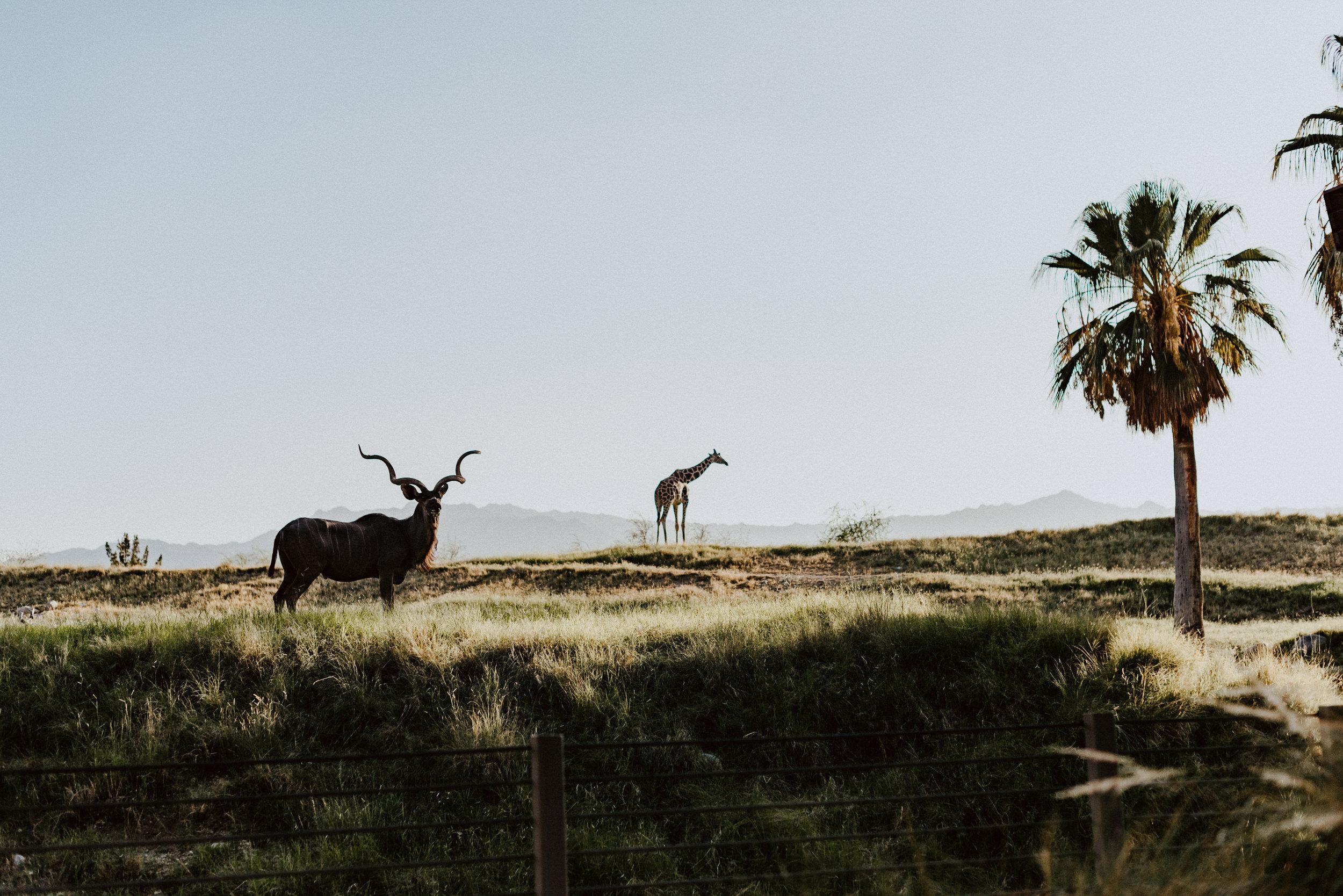 sSetting + Scenery - The Desert Shootout - The Living Desert-52.jpg