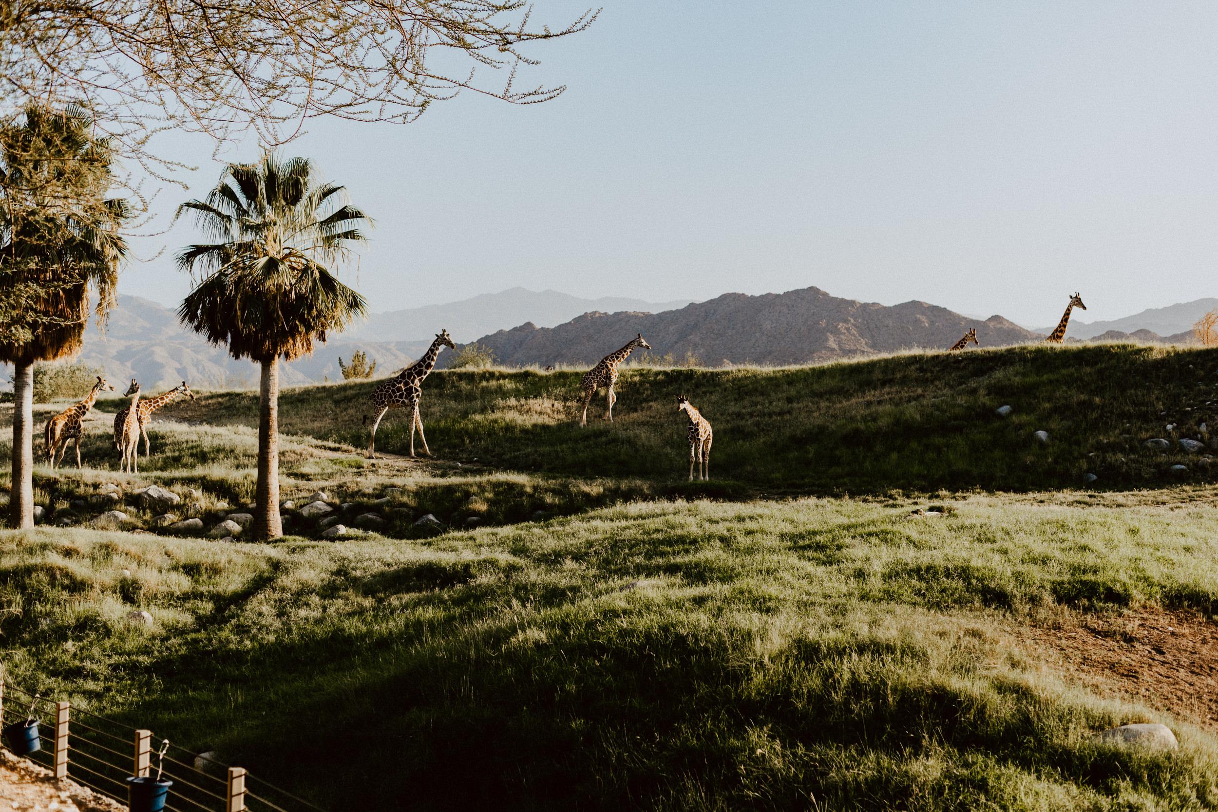 sSetting + Scenery - The Desert Shootout - The Living Desert-54.jpg