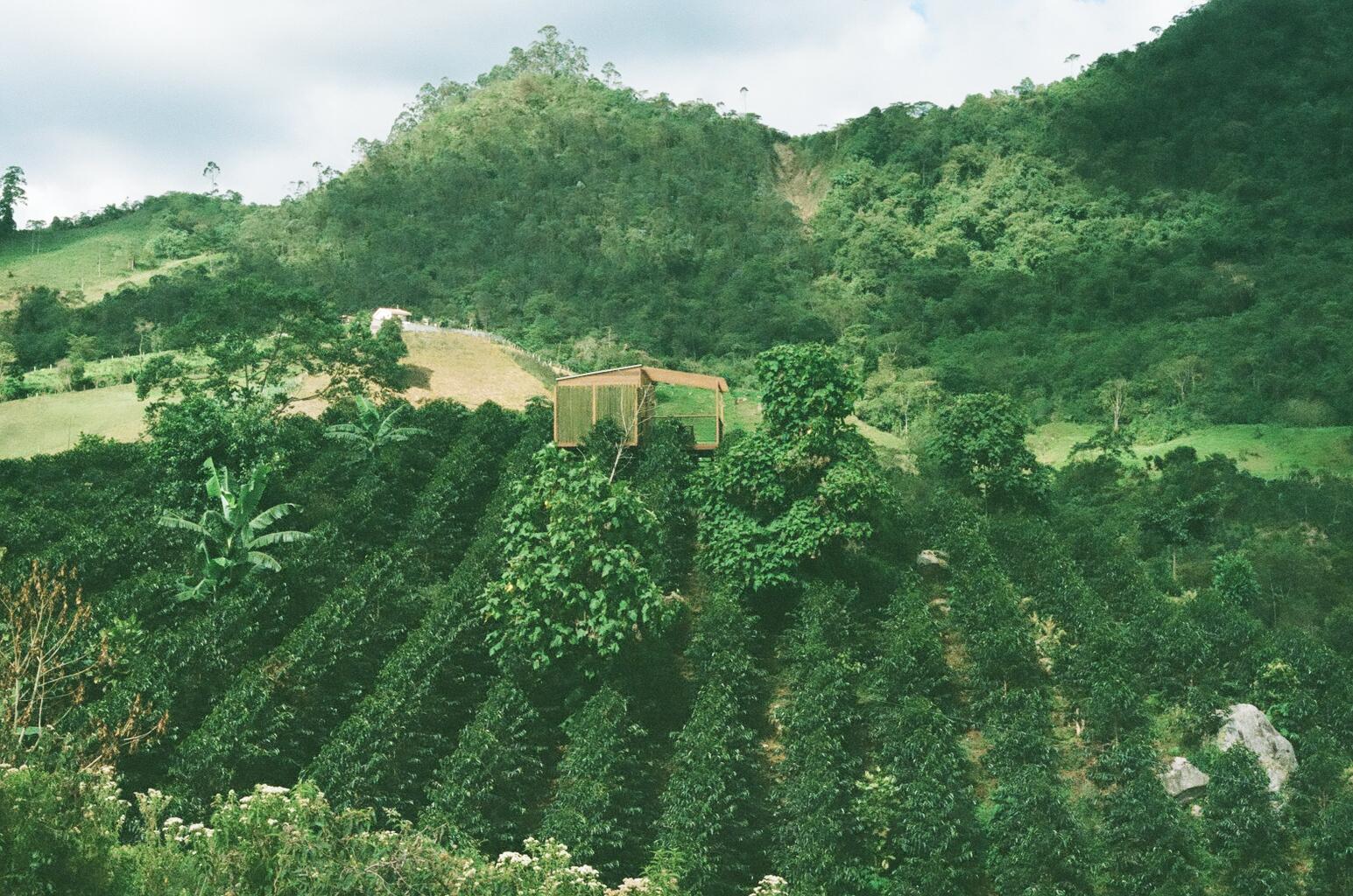 LA PALMA Y EL TUCAN Estate, taken during our Colombia origin trip in August 2015.