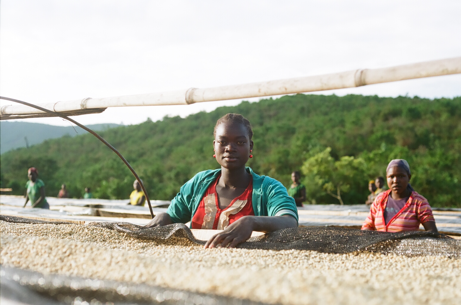 A woman from the Menit Tribe, monitoring the drying beds in Gesha Village