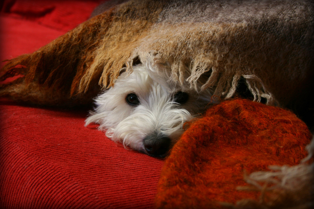 This pup has the right idea. | Image via Flickr User  jafsegal