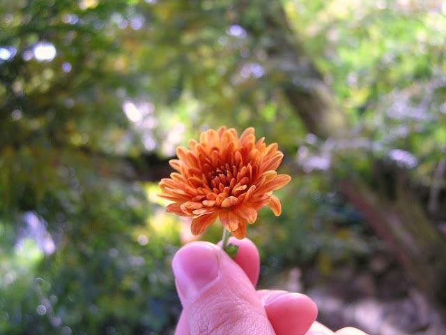 fall+flower.JPG