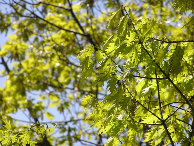 spring+2.jpg