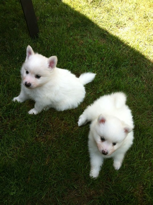 This is Loki and his sister as puppies (left). I thought you'd like to see something cute. You're welcome.