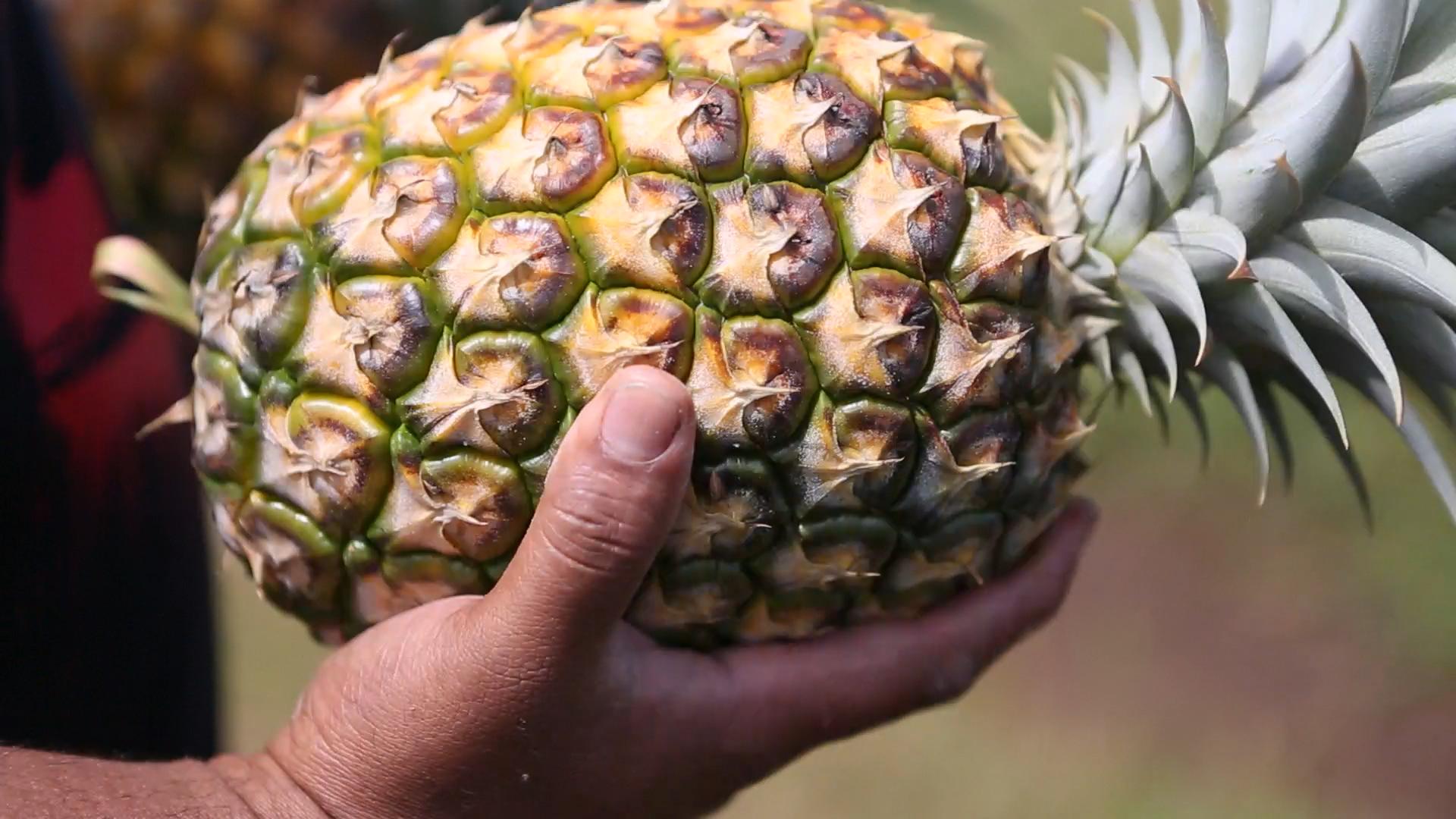 pineappleinhand.png
